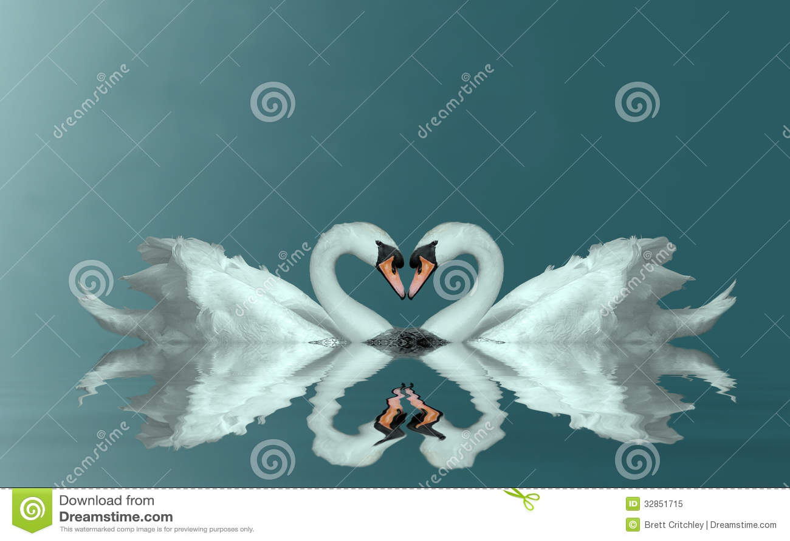 Het hart van liefdezwanen