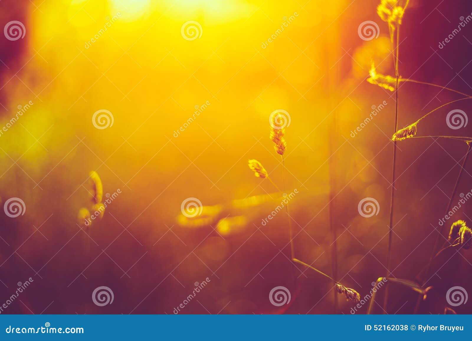 Het Heldere Zonlicht van Autumn Grass Meadow Close-Up With