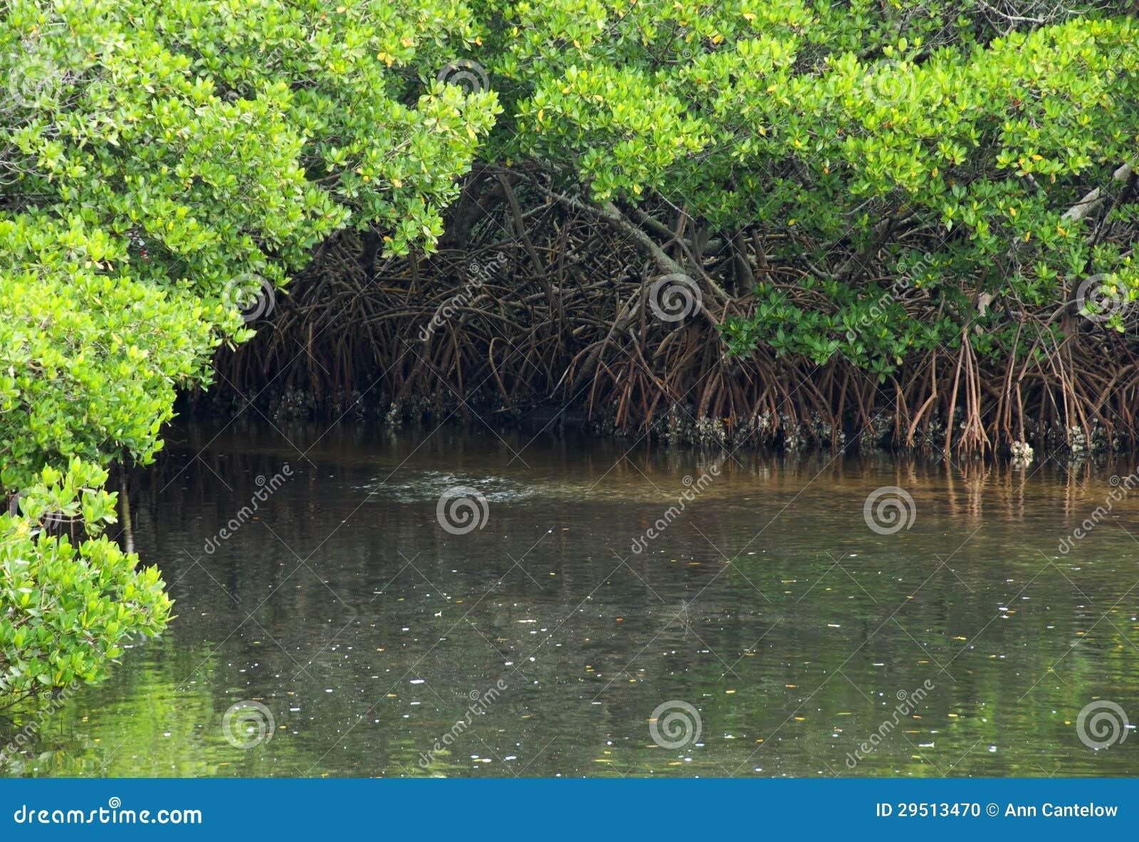 Het Hoekje van het Water van de mangrove