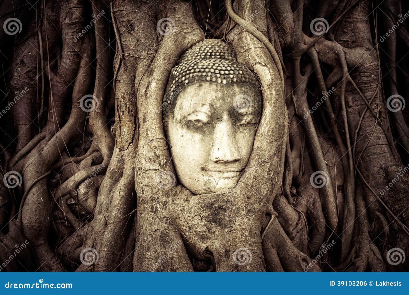 Het Hoofd van Boedha in de boomwortels die wordt verborgen