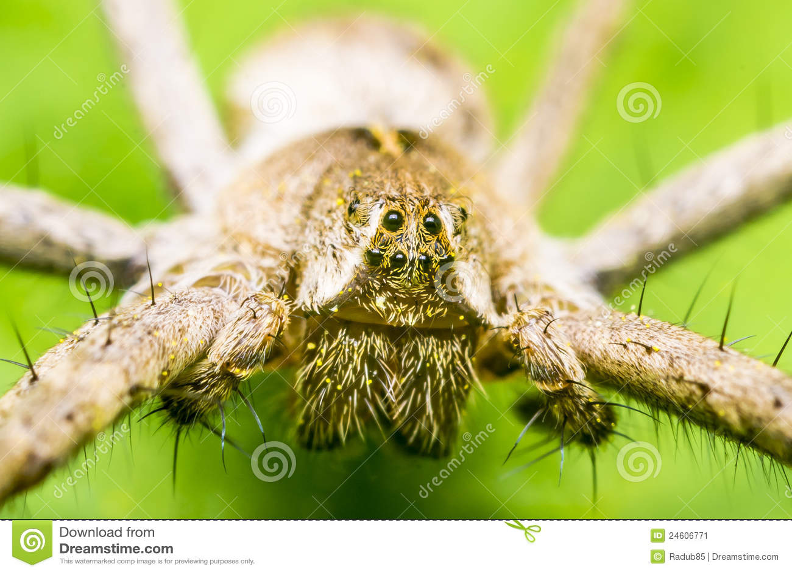 Het Hoofd van de spin