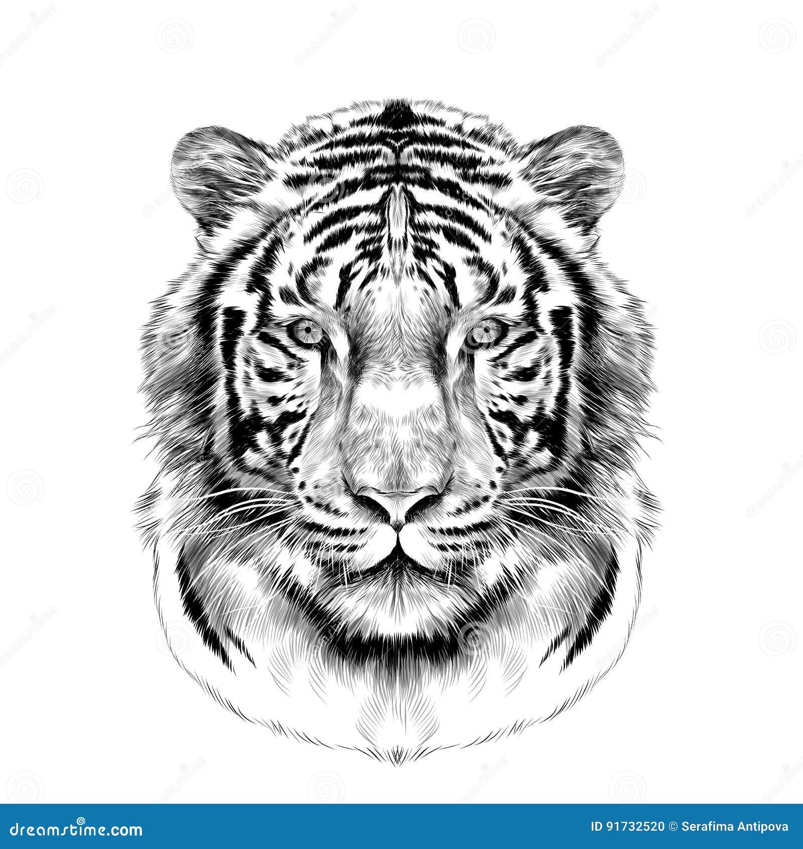 Het hoofd van de witte vectorgrafiek van de tijgerschets