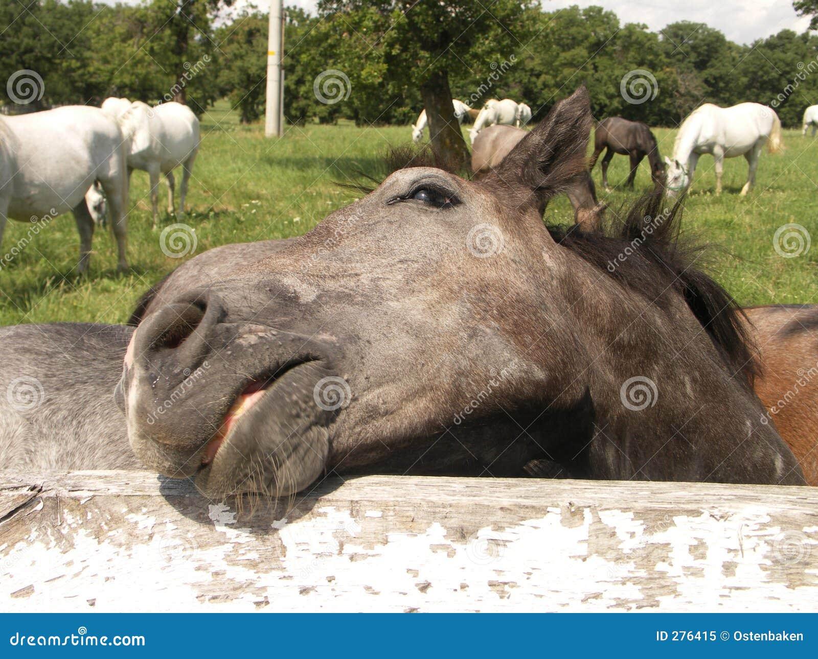 Het hoofd van het paard #1