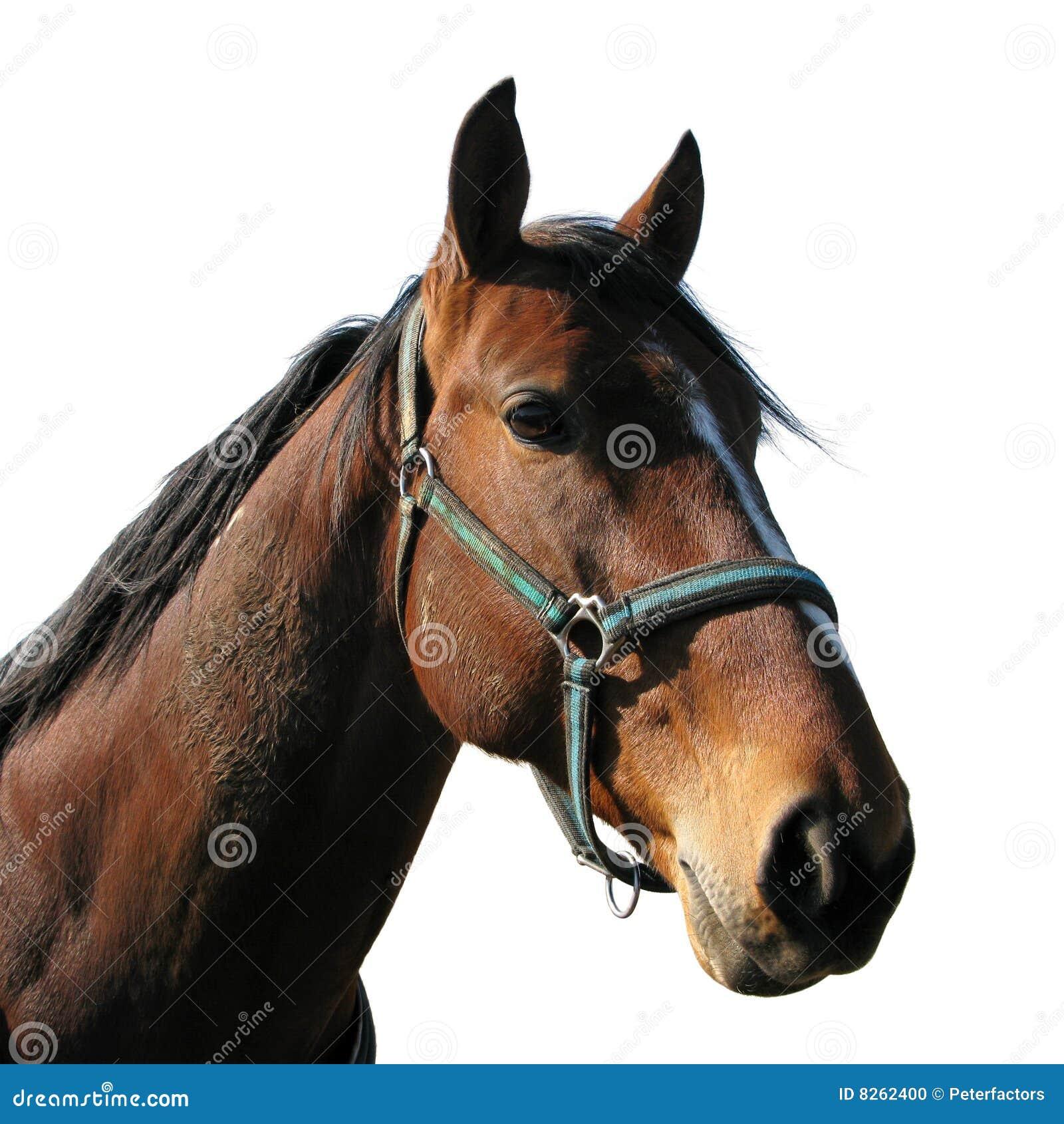 Het Hoofd Van Het Paard Stock Foto Afbeelding Bestaande