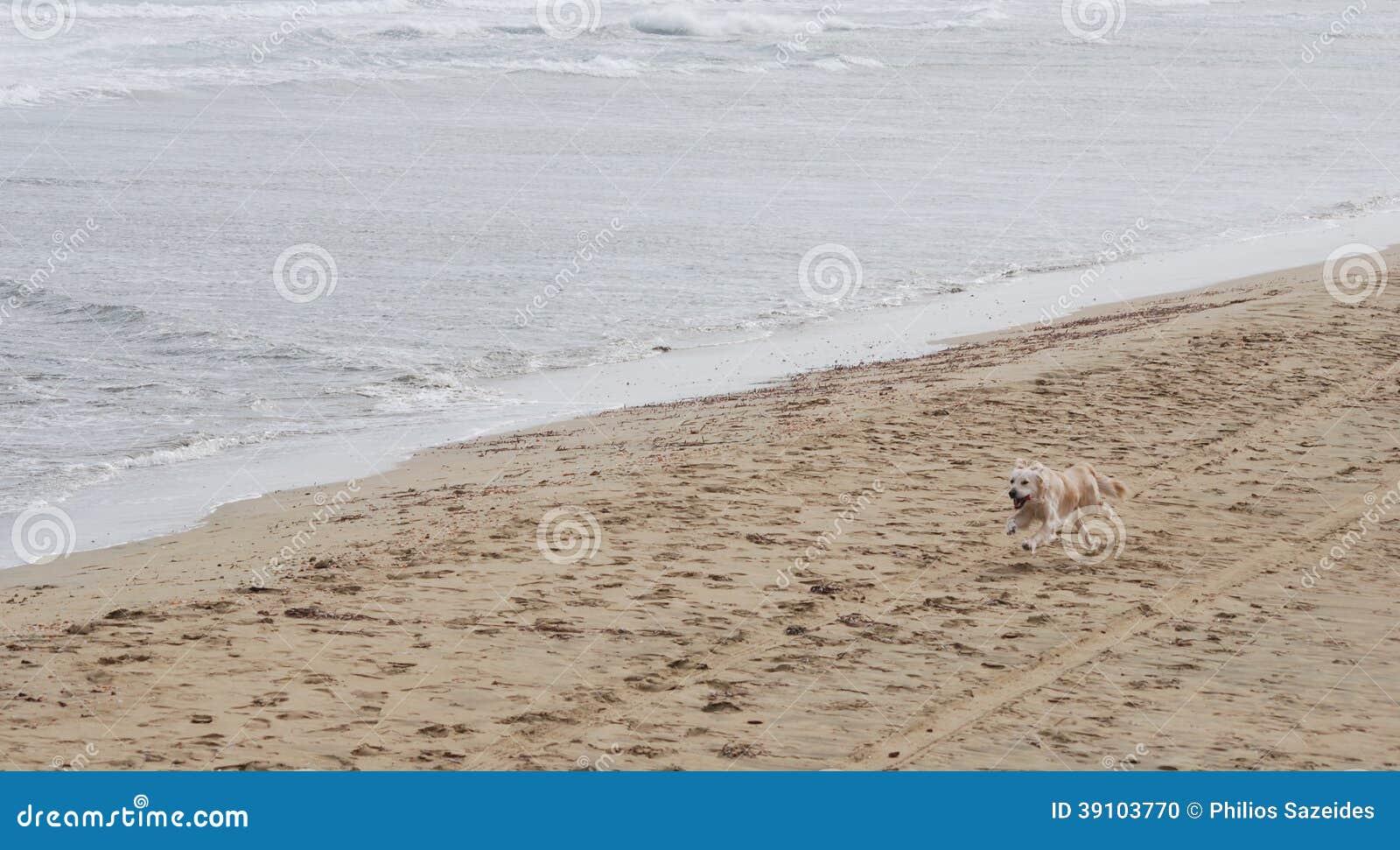 Het houden van van Labrador puppy