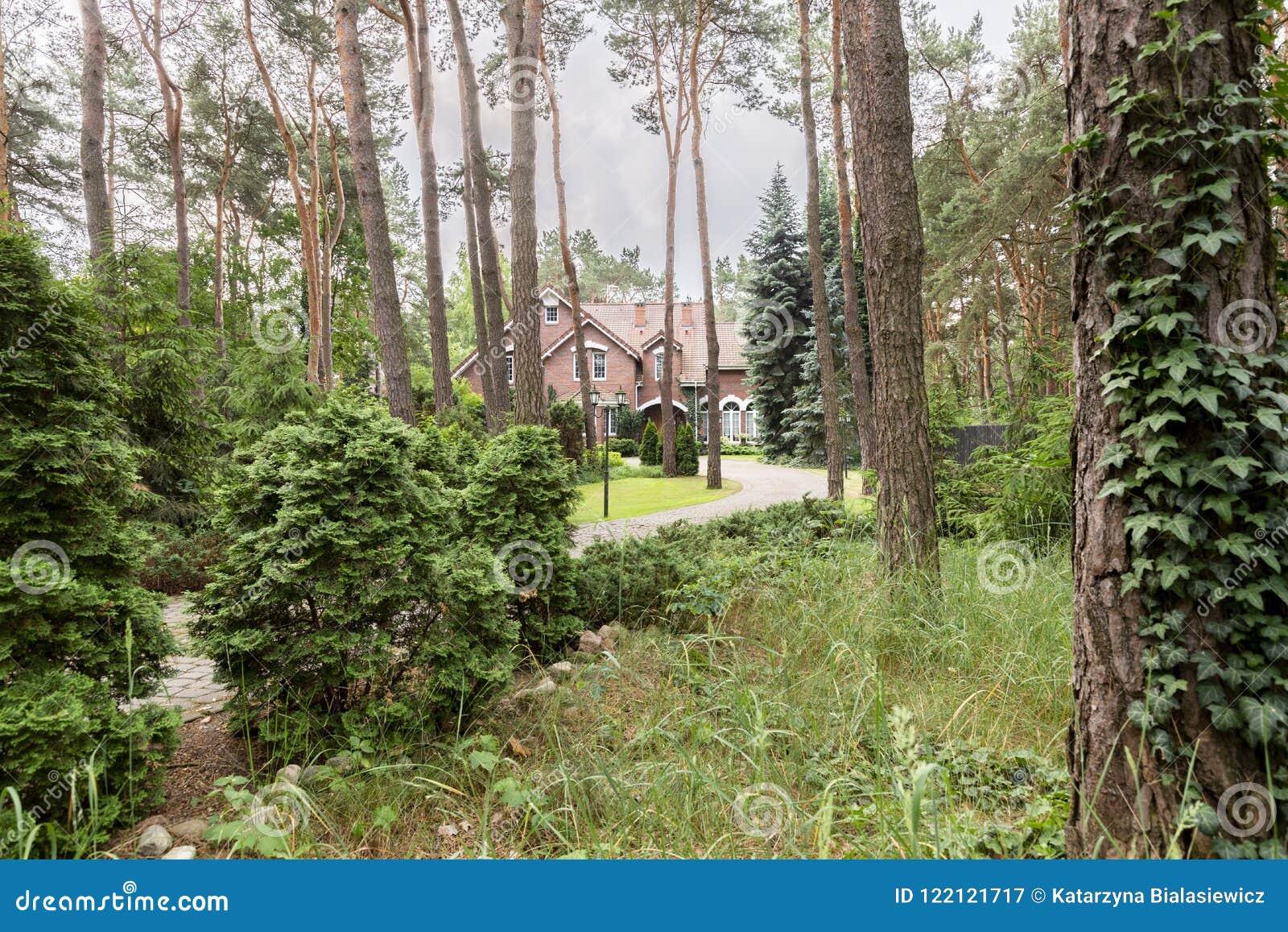 Het hout met struiken en de bomen met een Engelse stijl huisvesten op de achtergrond