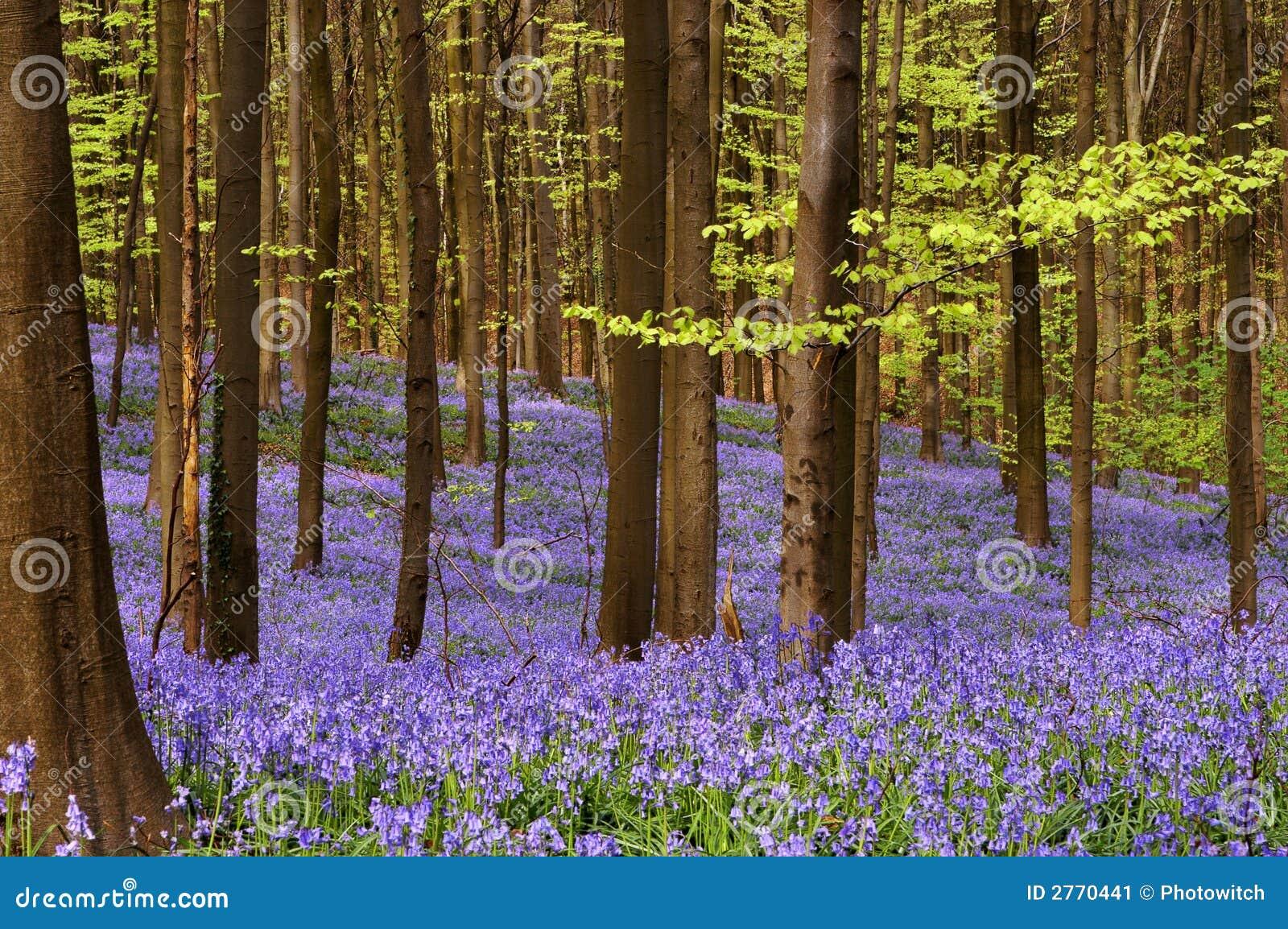 Het hout van april