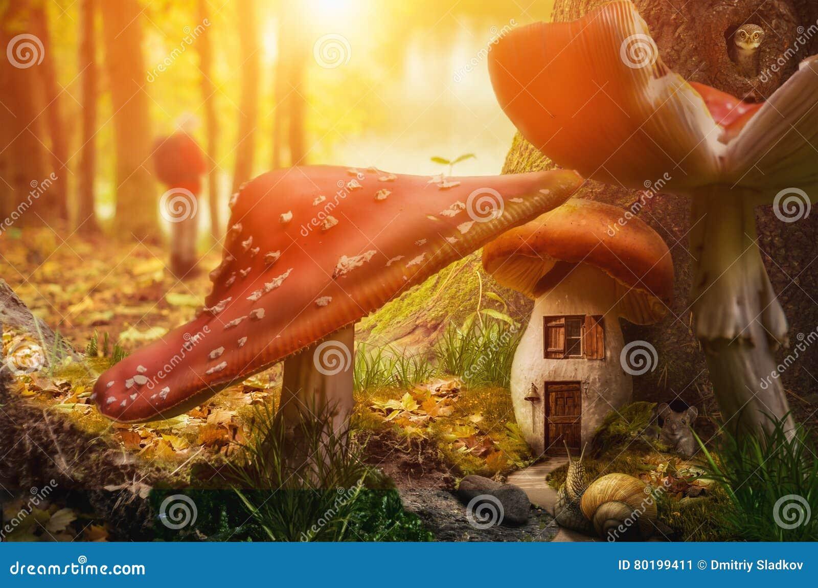 Het huis van de paddestoelfee