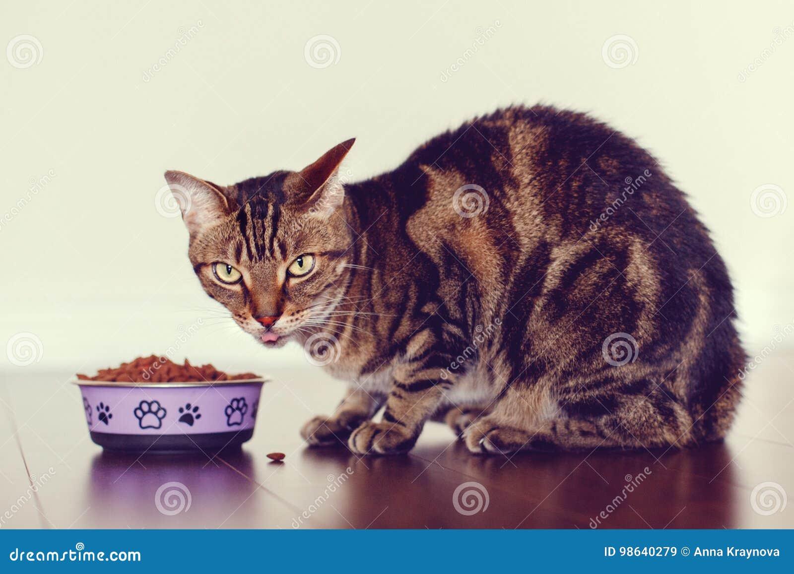 Het huisdier van de gestreepte katkat met groene gele ogen die op vloer zitten die droog voedsel eten