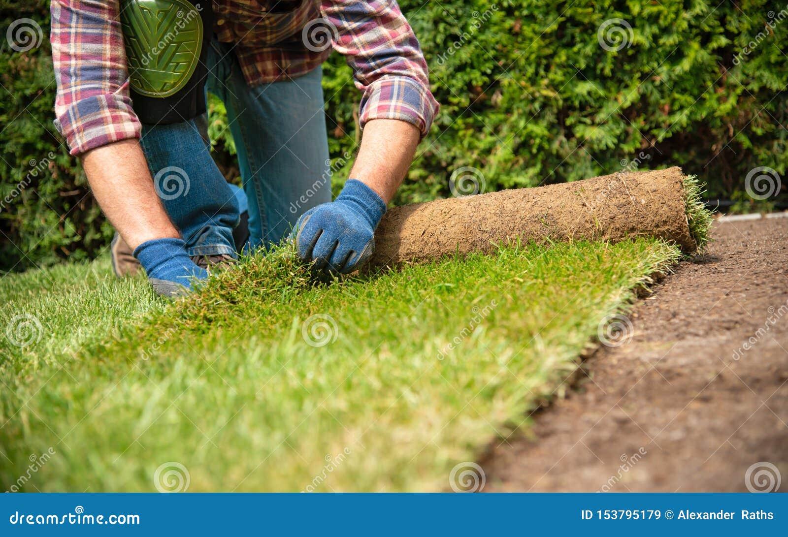 Het installeren van grasbroodjes in de tuin