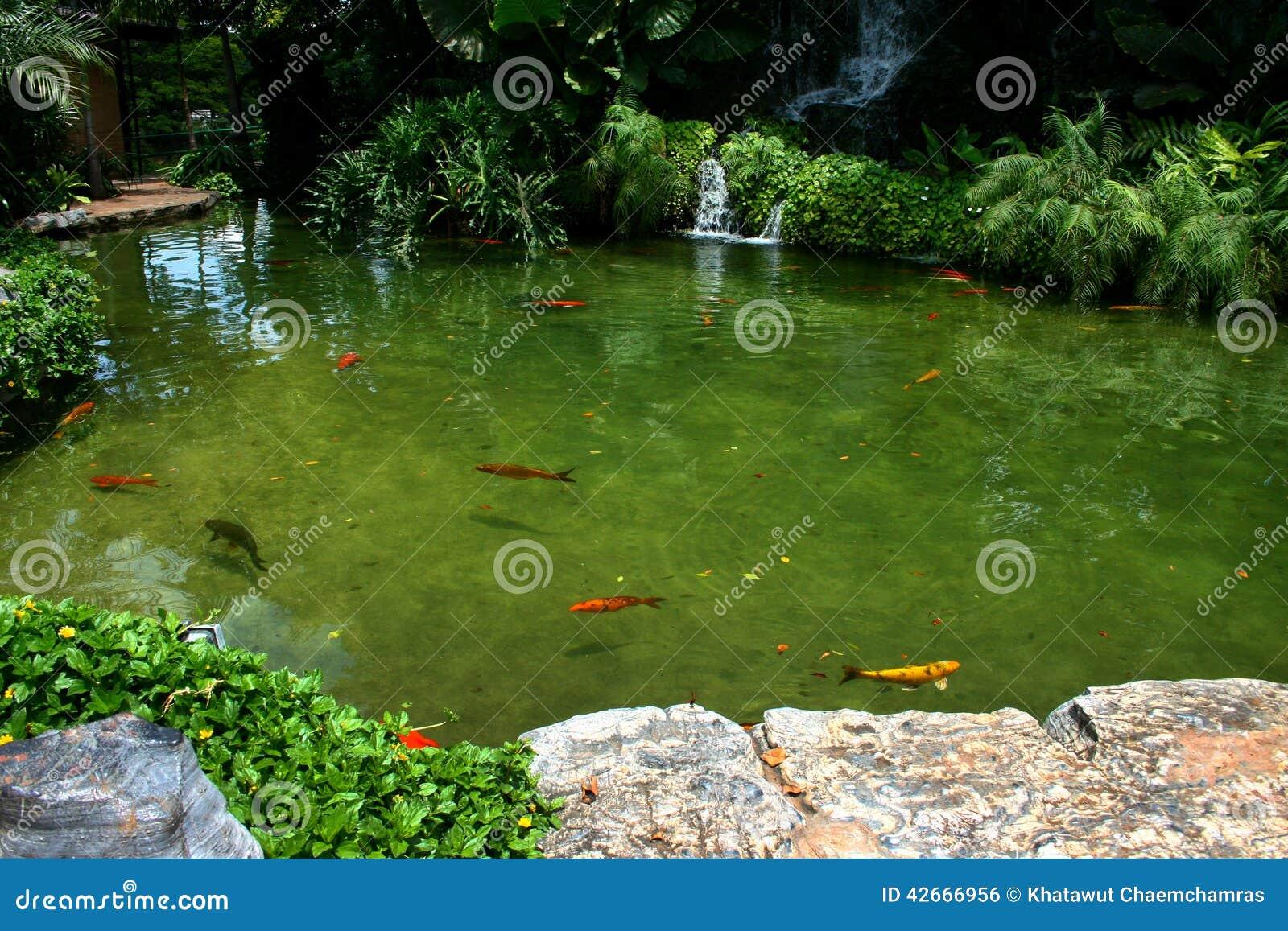 Het Japanse geschakeerde karpers zwemmen