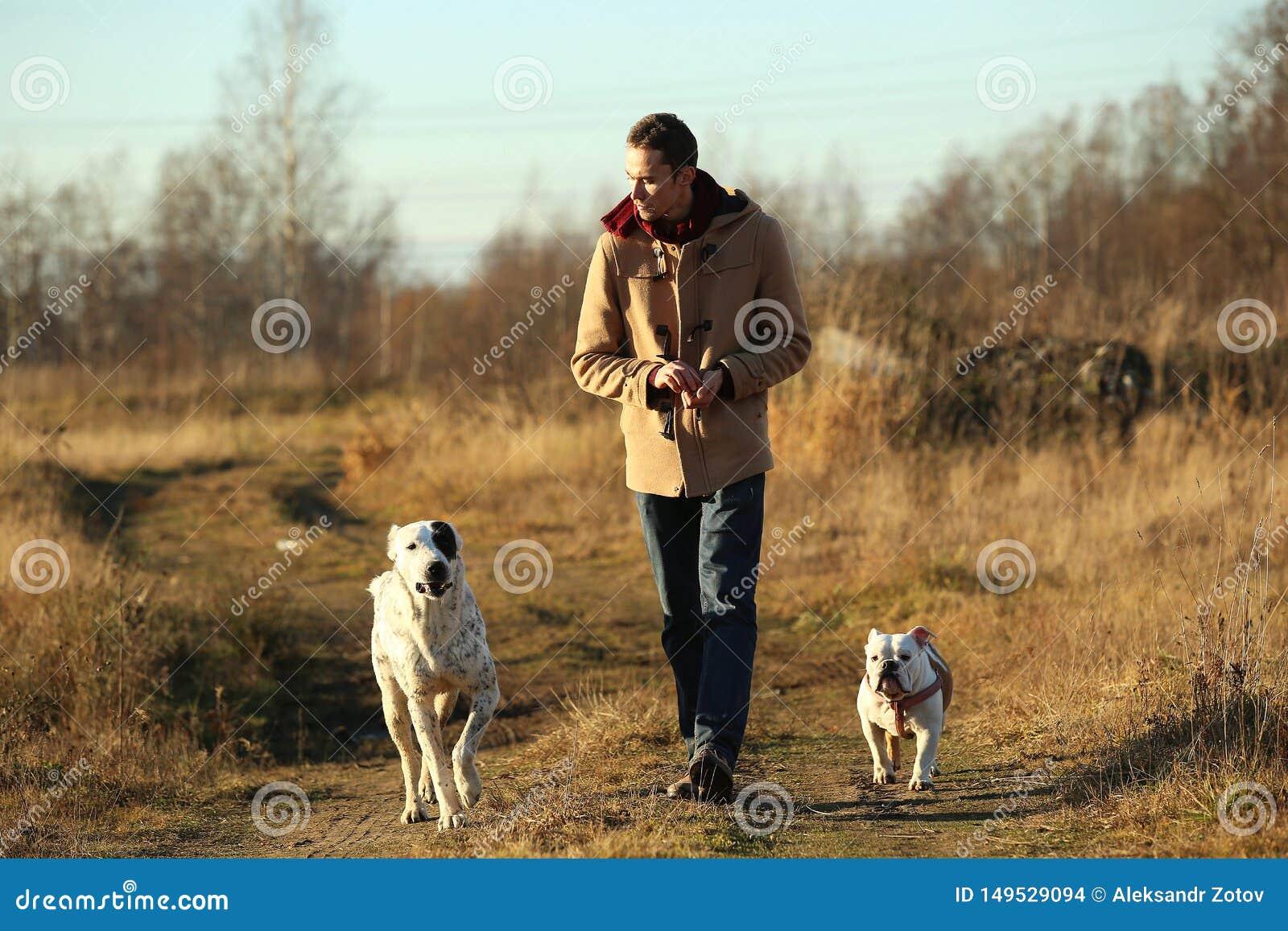 Het jonge gelukkige Europese glimlachen en het lachen lopen op een gebied met twee honden