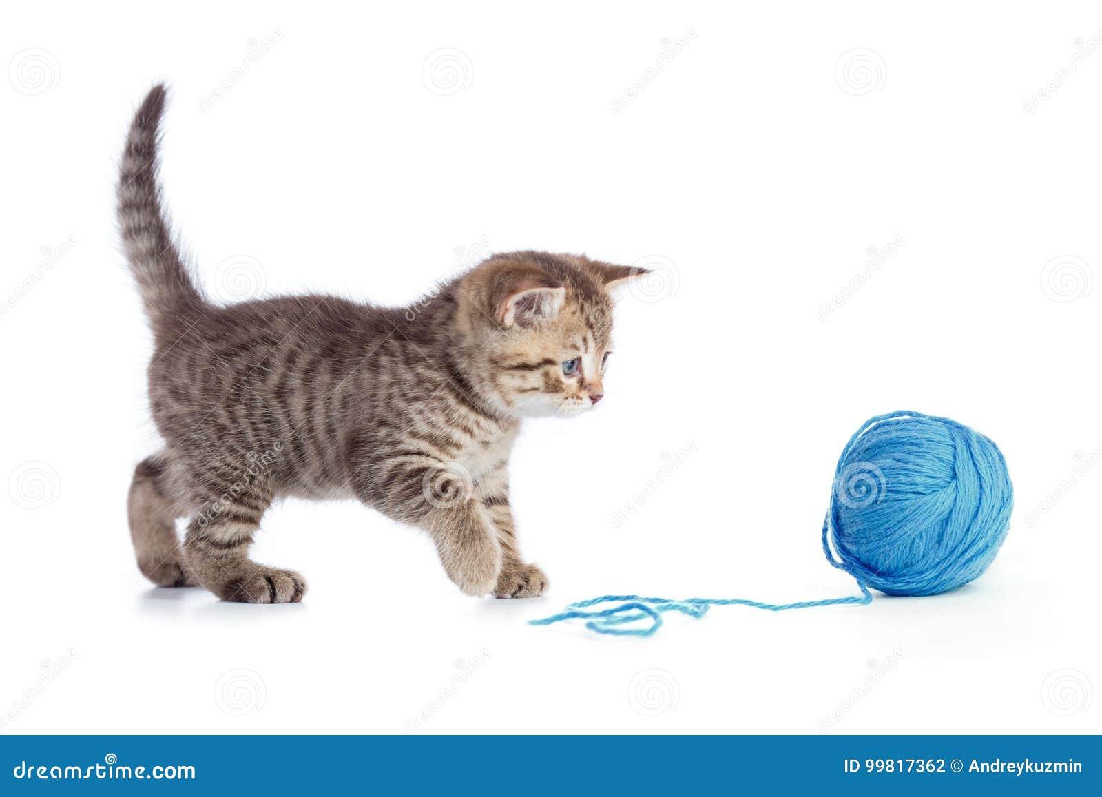 Het jonge kat spelen met blauwe geïsoleerd clew