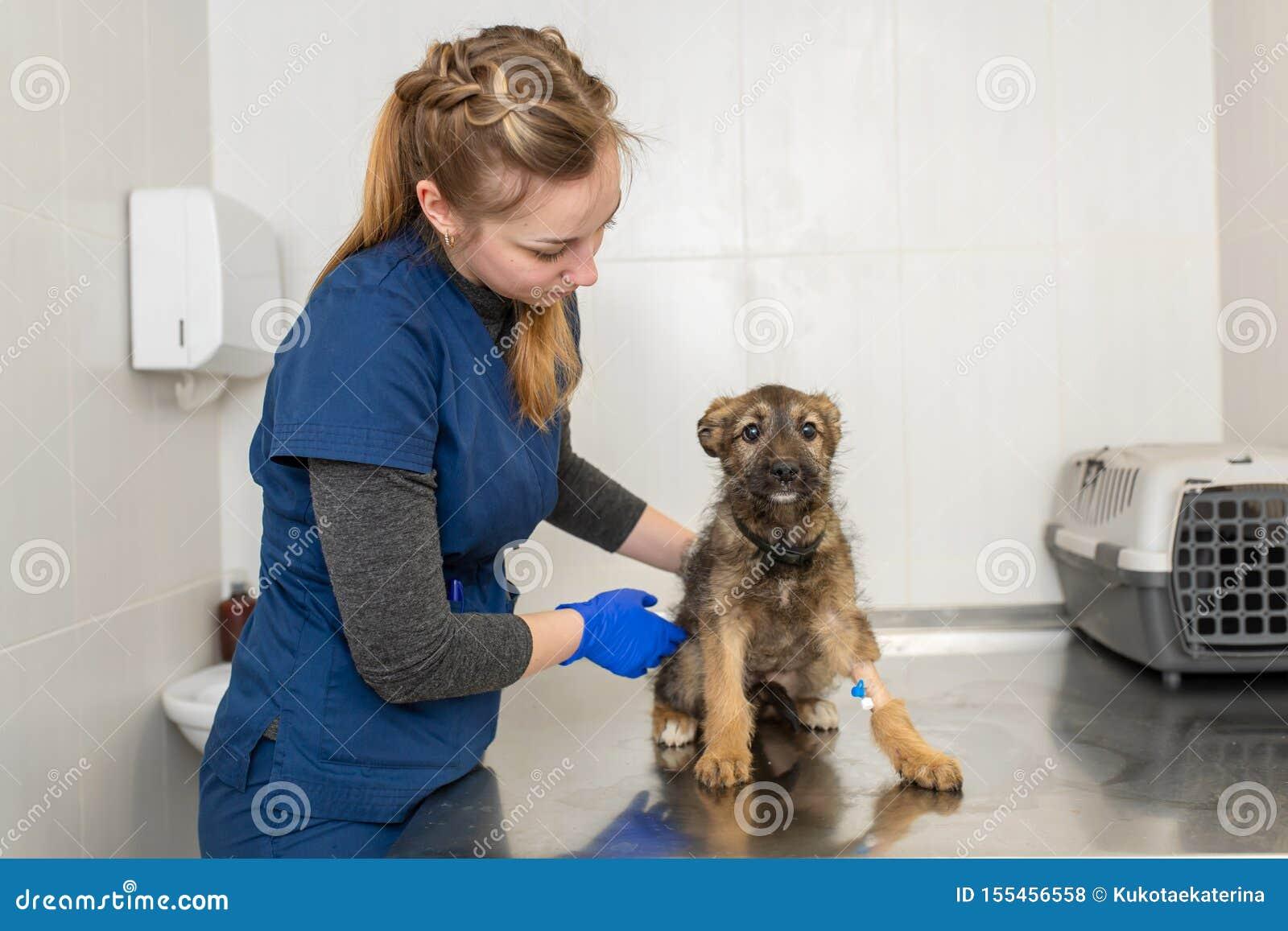 Het jonge meisje veterinaire gelukkige puppy van het artsenexamen
