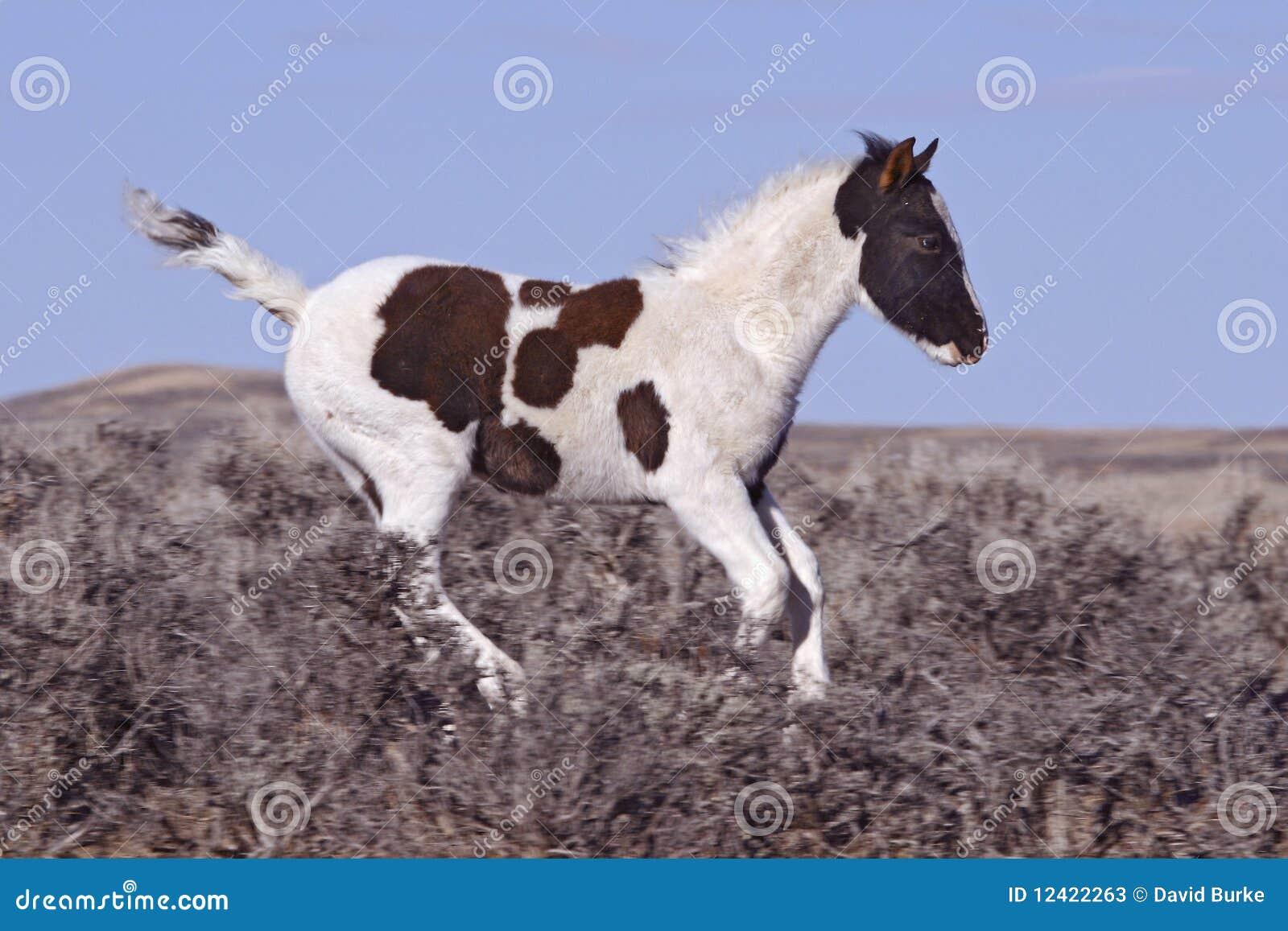Het jonge Veulen van de Mustang