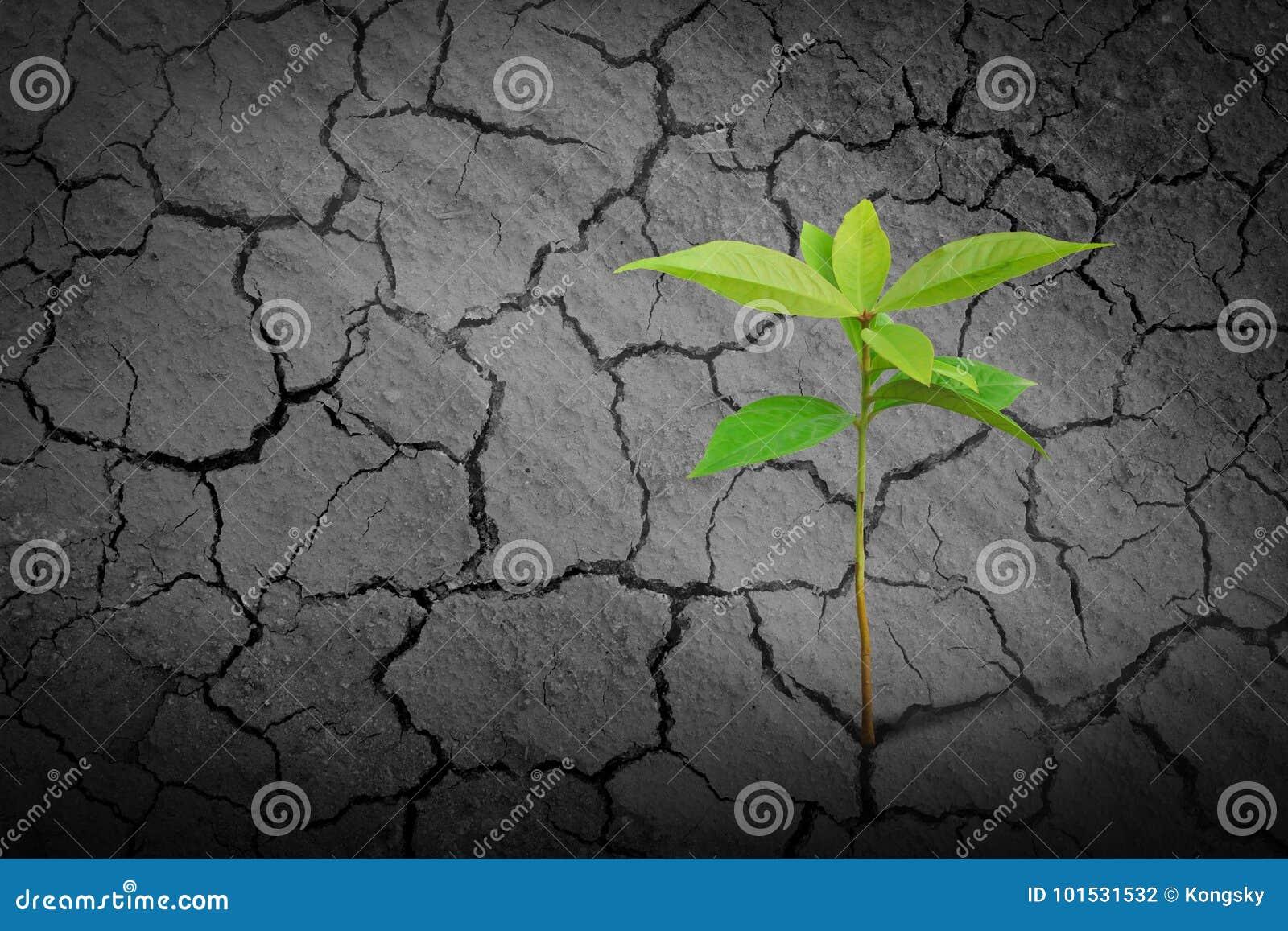 Het jonge zaailing groeien op klei droge grond