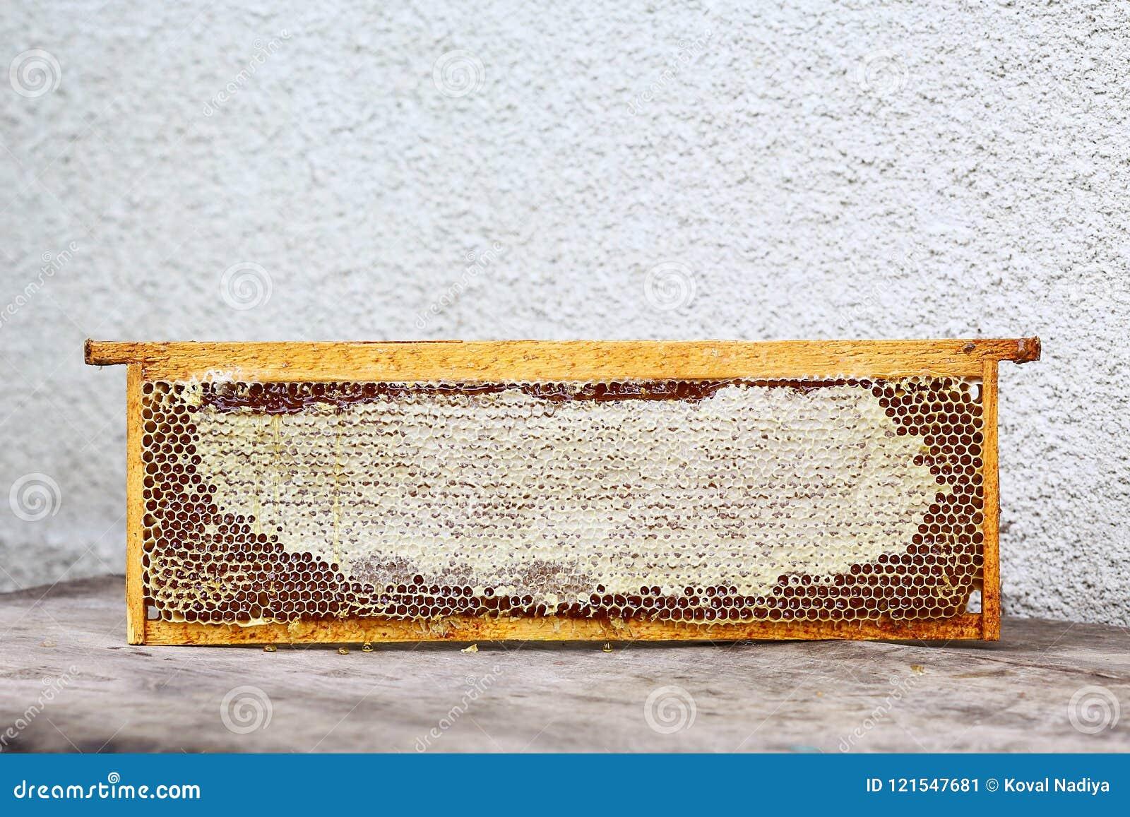 Het kader van de bijenstalbijenkorf met bijen zet structuurhoogtepunt van verse bijenhoning in in de was honingraten Geïsoleerde