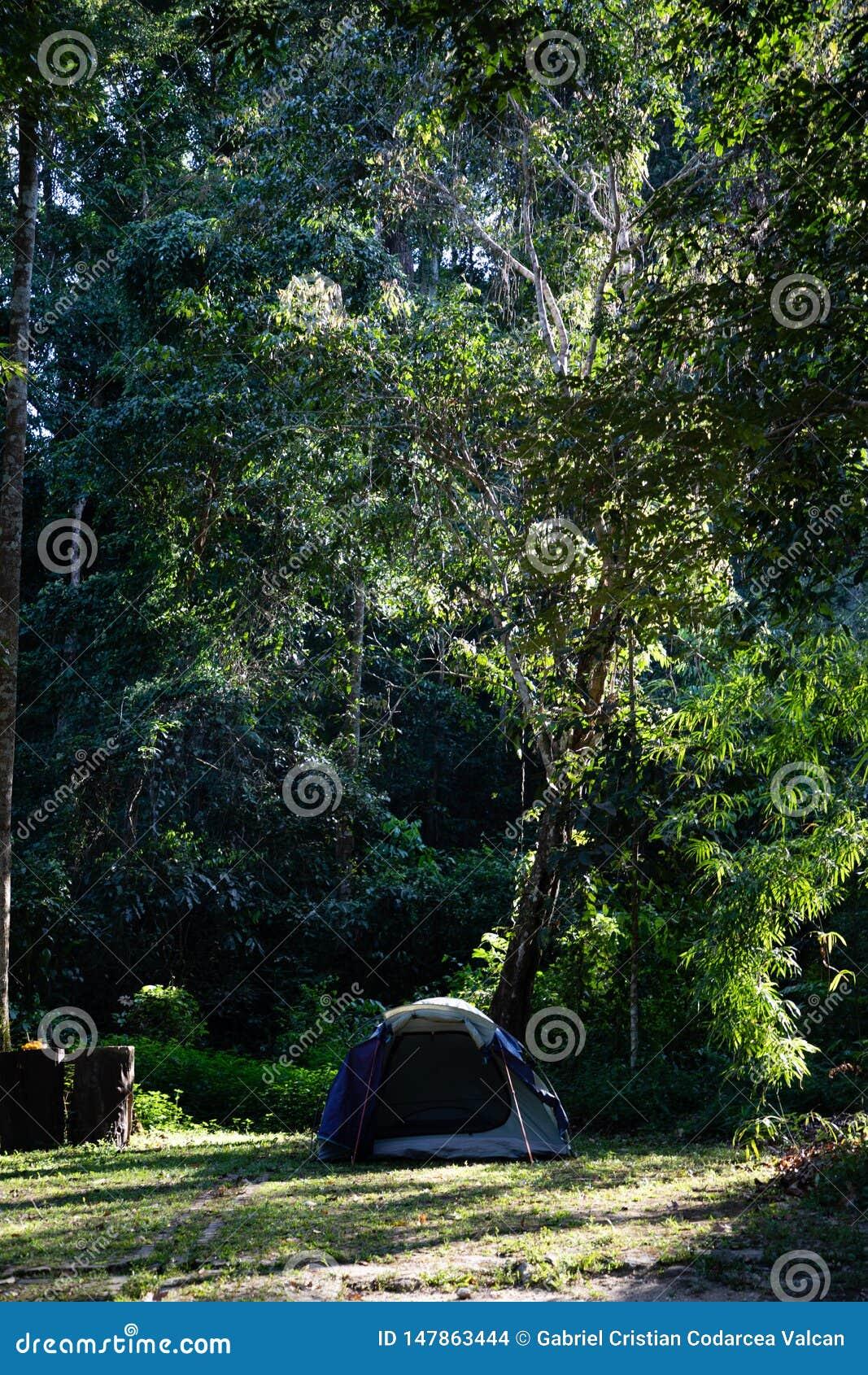 Het kamperen tent onder wildernis lange bomen
