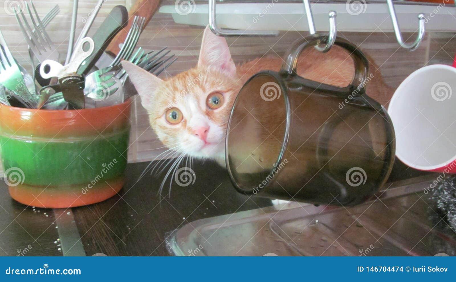 Het katje verborg achter de koppen