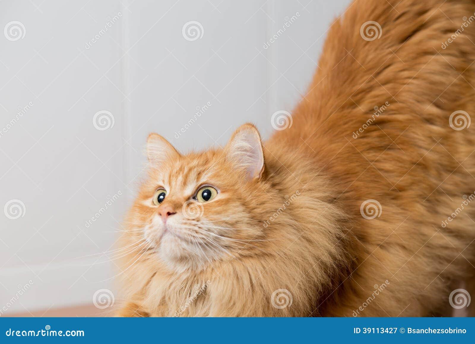 Het kattenwachten om op te springen