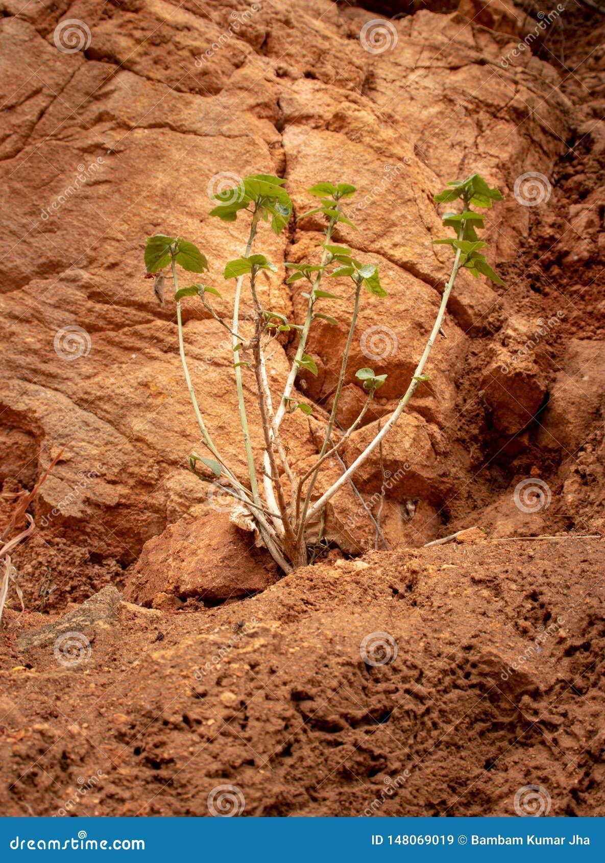 Het kleine boom Geïsoleerde groeien in concrete gaten