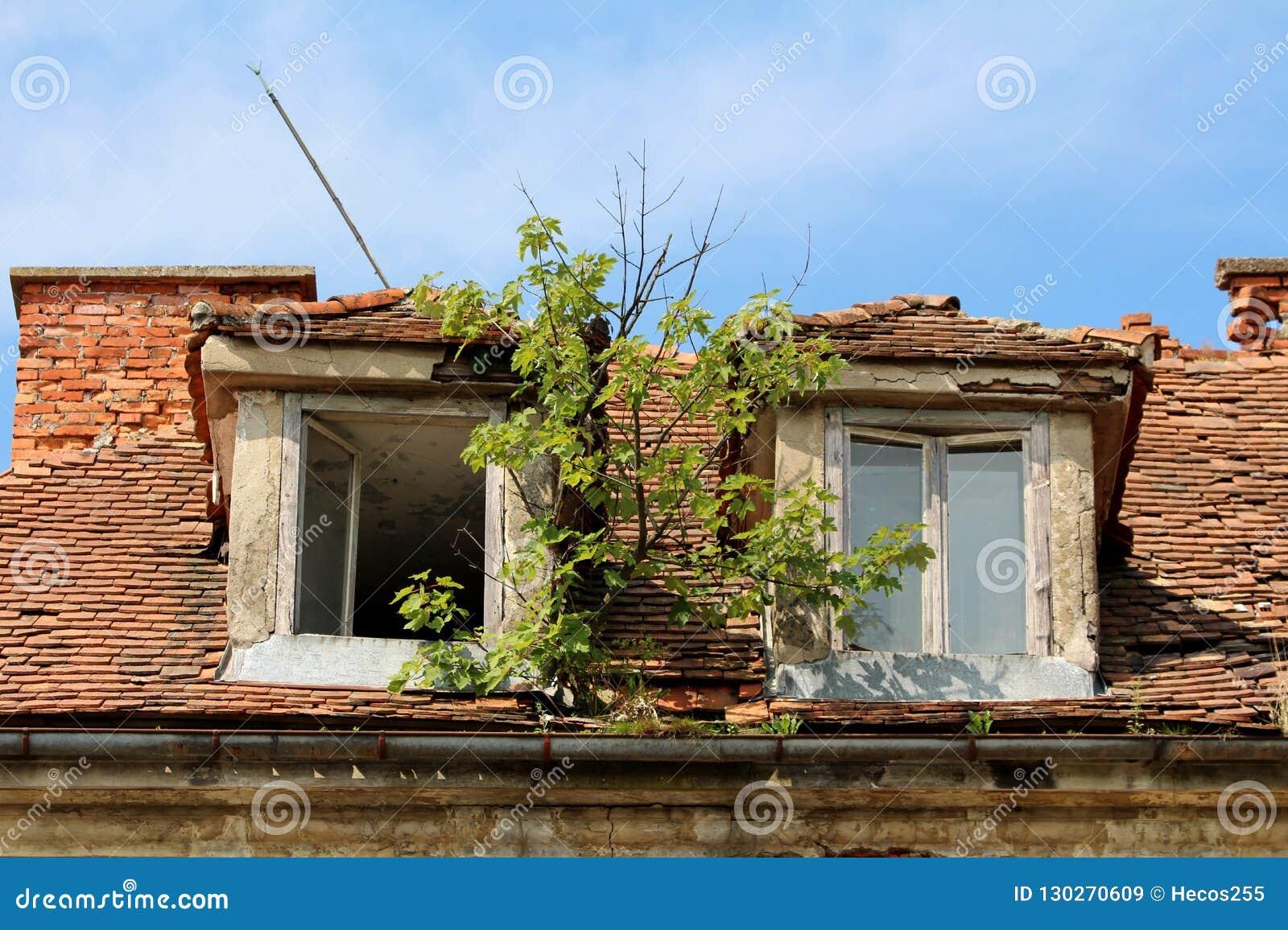 Het kleine boom groeien van geroeste metaalgoot tussen twee gebroken dakvensters bij de verlaten oude bouw
