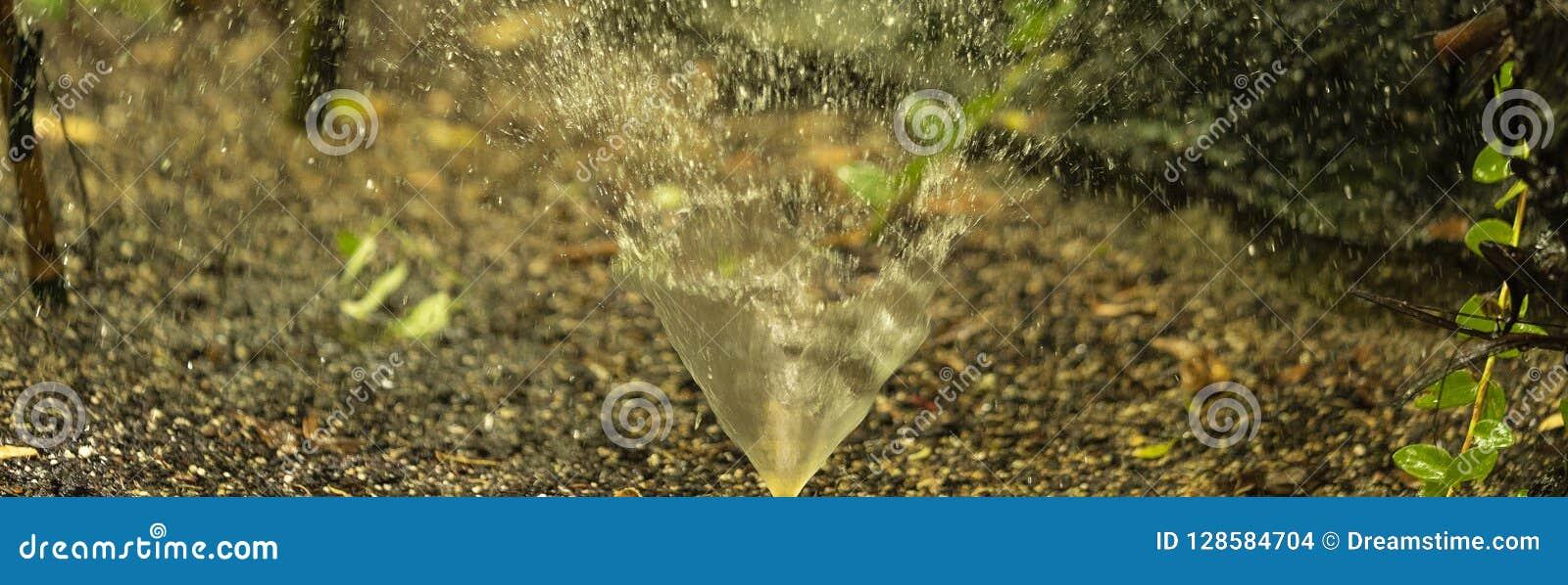 Het kleine hoofd bespattende water van de tuinirrigatie