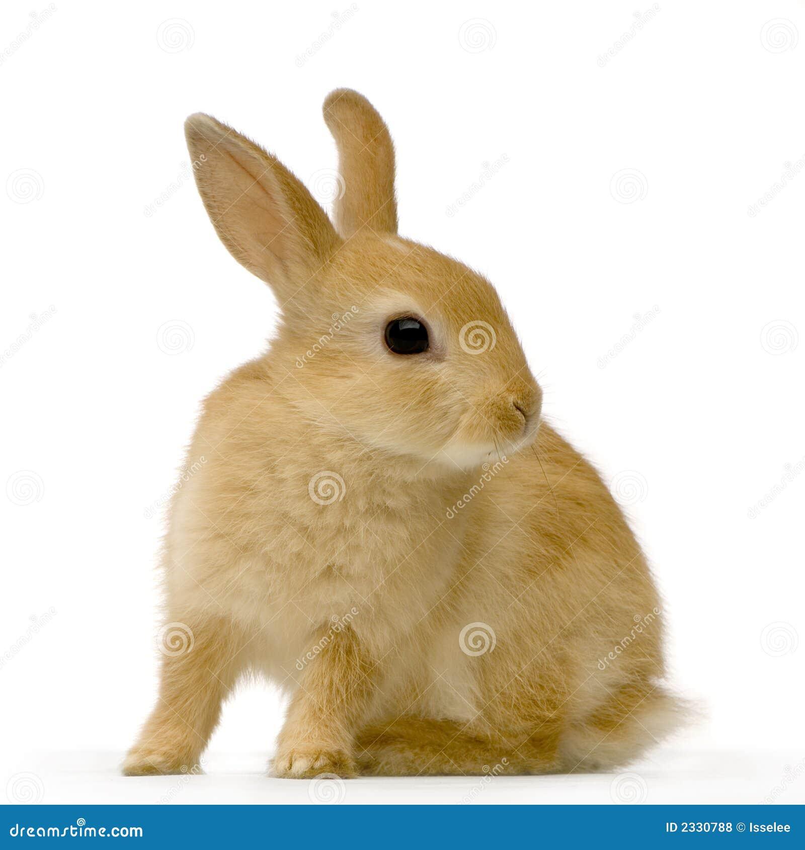 Het konijn van de spion