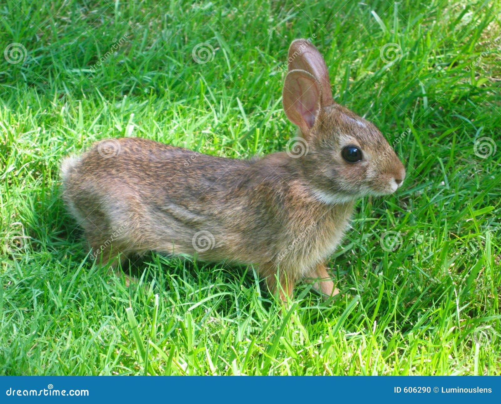 Het Konijn van het konijntje