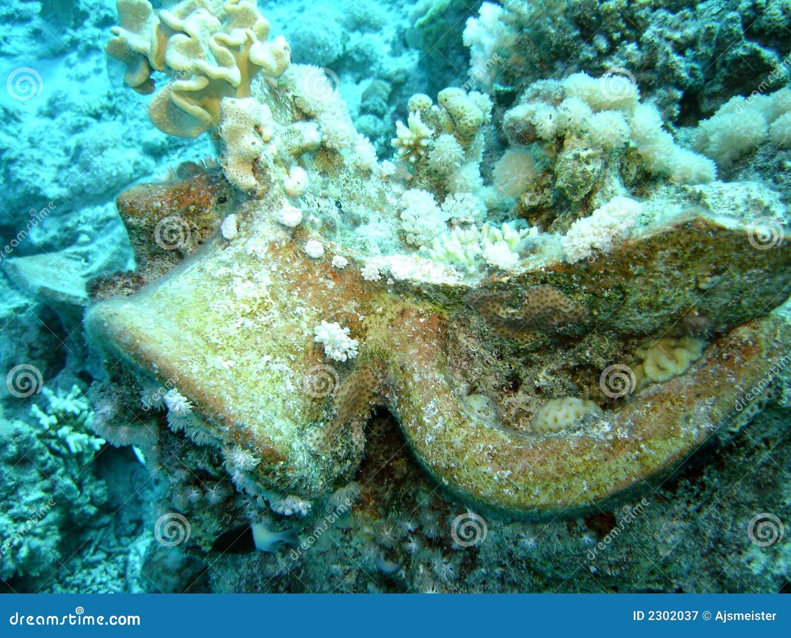 Het koraal encrusted Roman kruik