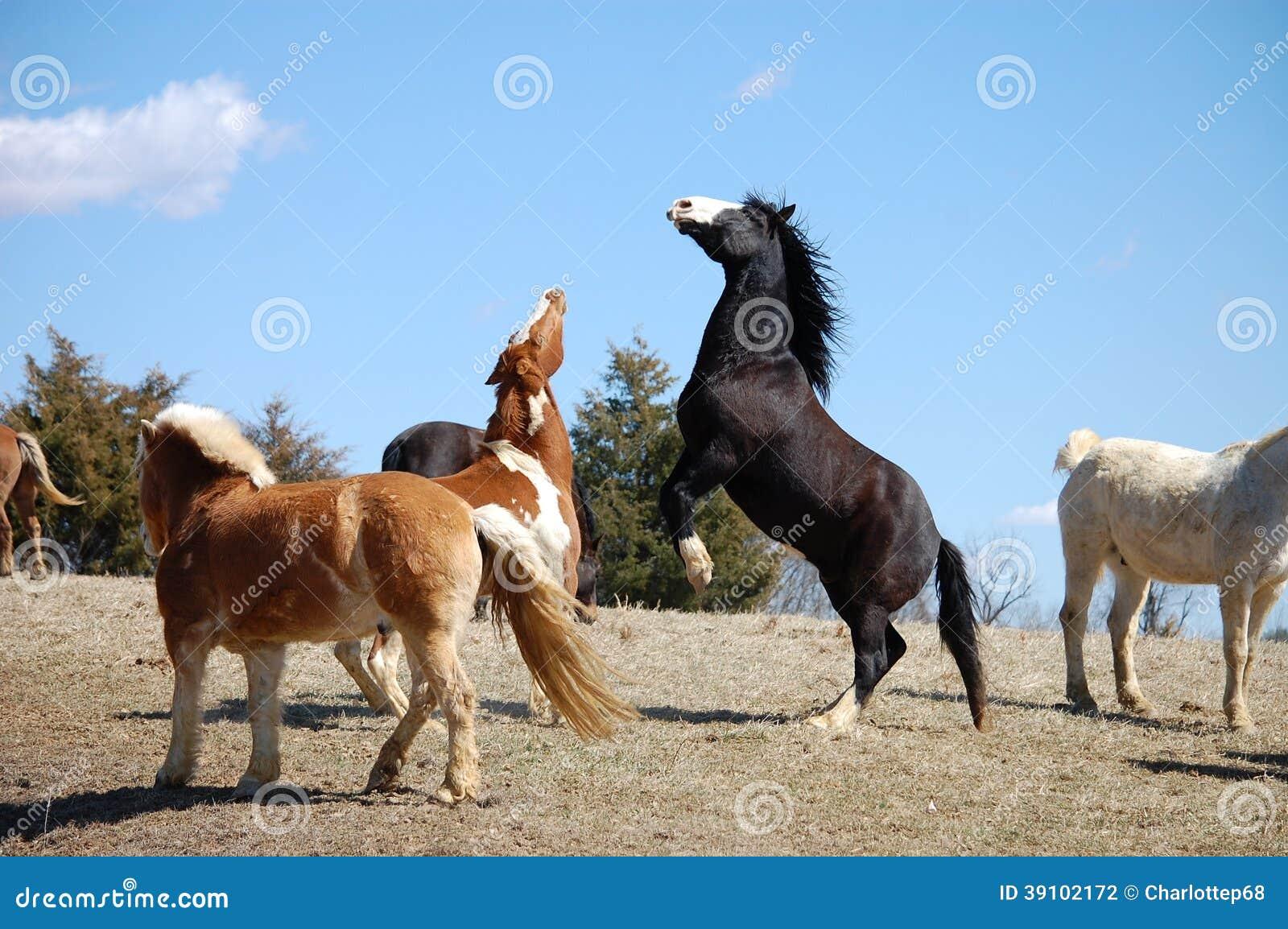 Het lachen paarden