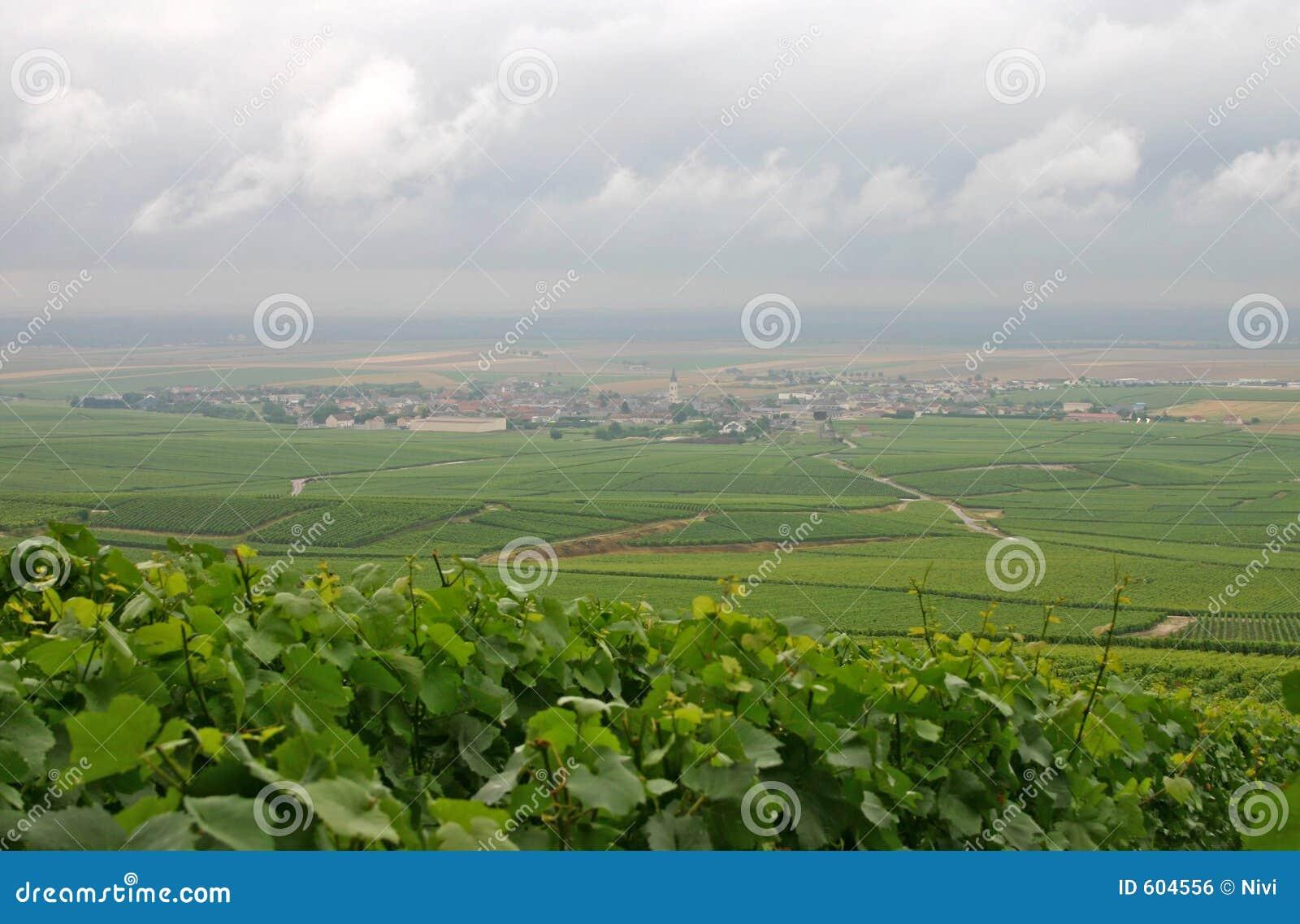 Het land van Champagne (Frankrijk)