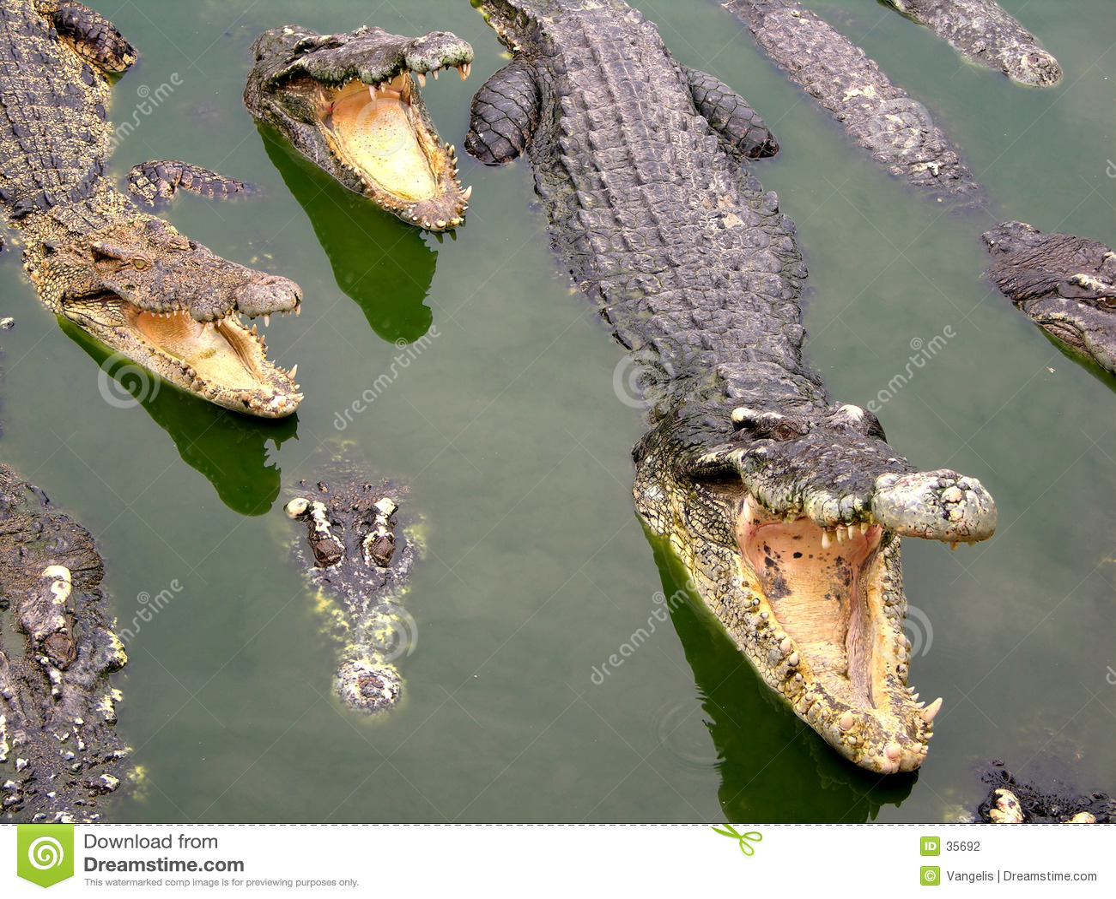 Het Landbouwbedrijf en de Dierentuin van de Krokodil van Samutprakan