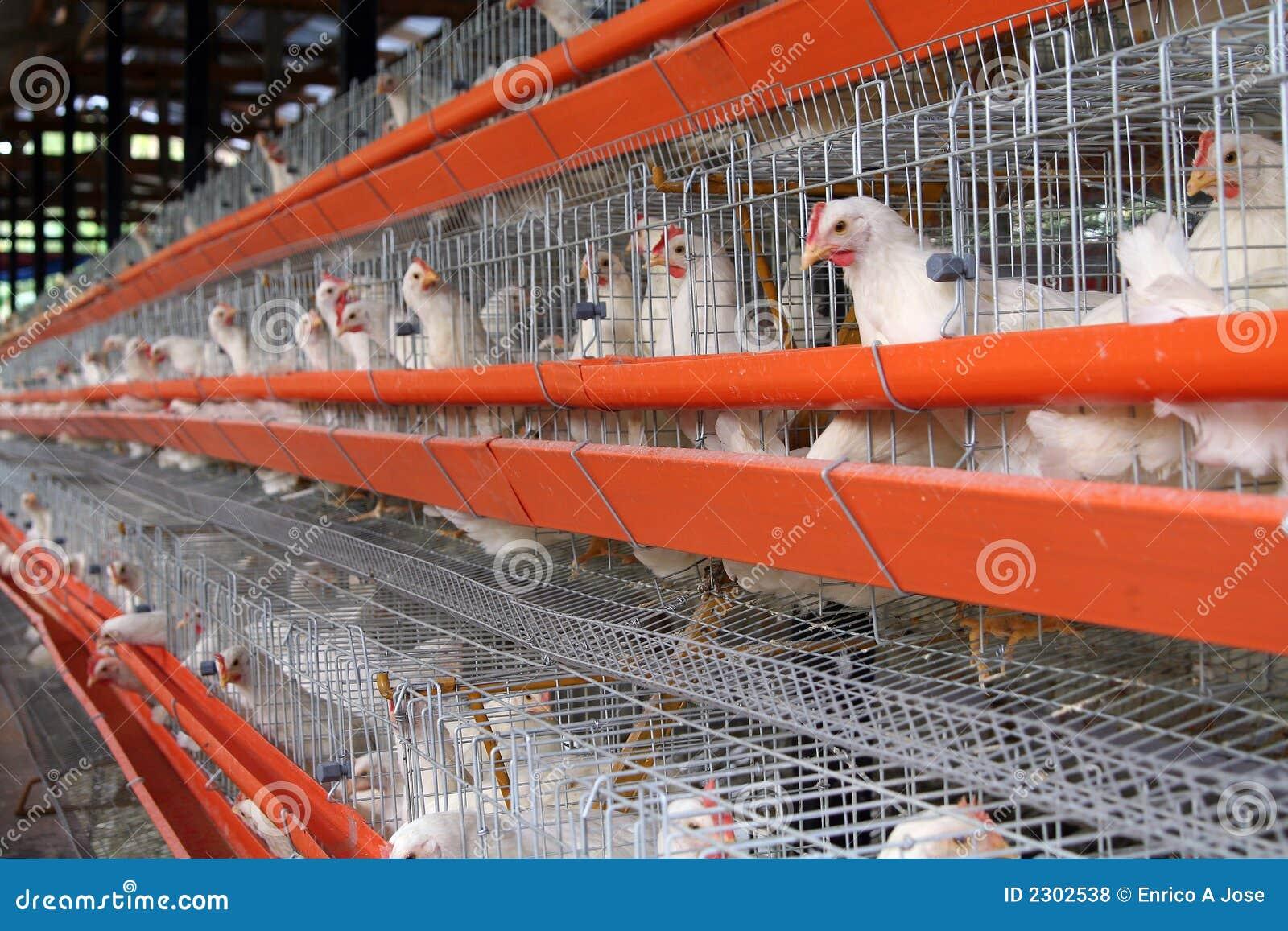 Het landbouwbedrijf van het ei