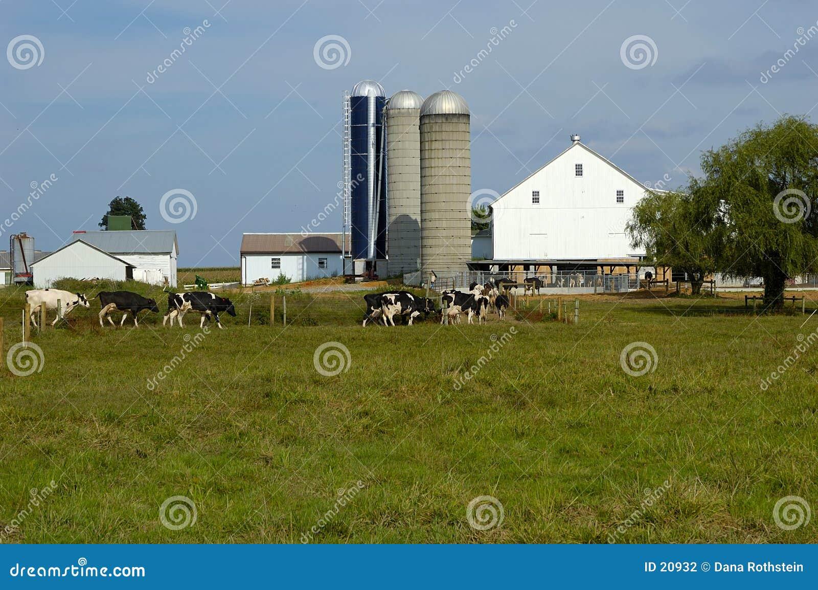 Het Landbouwbedrijf van het vee
