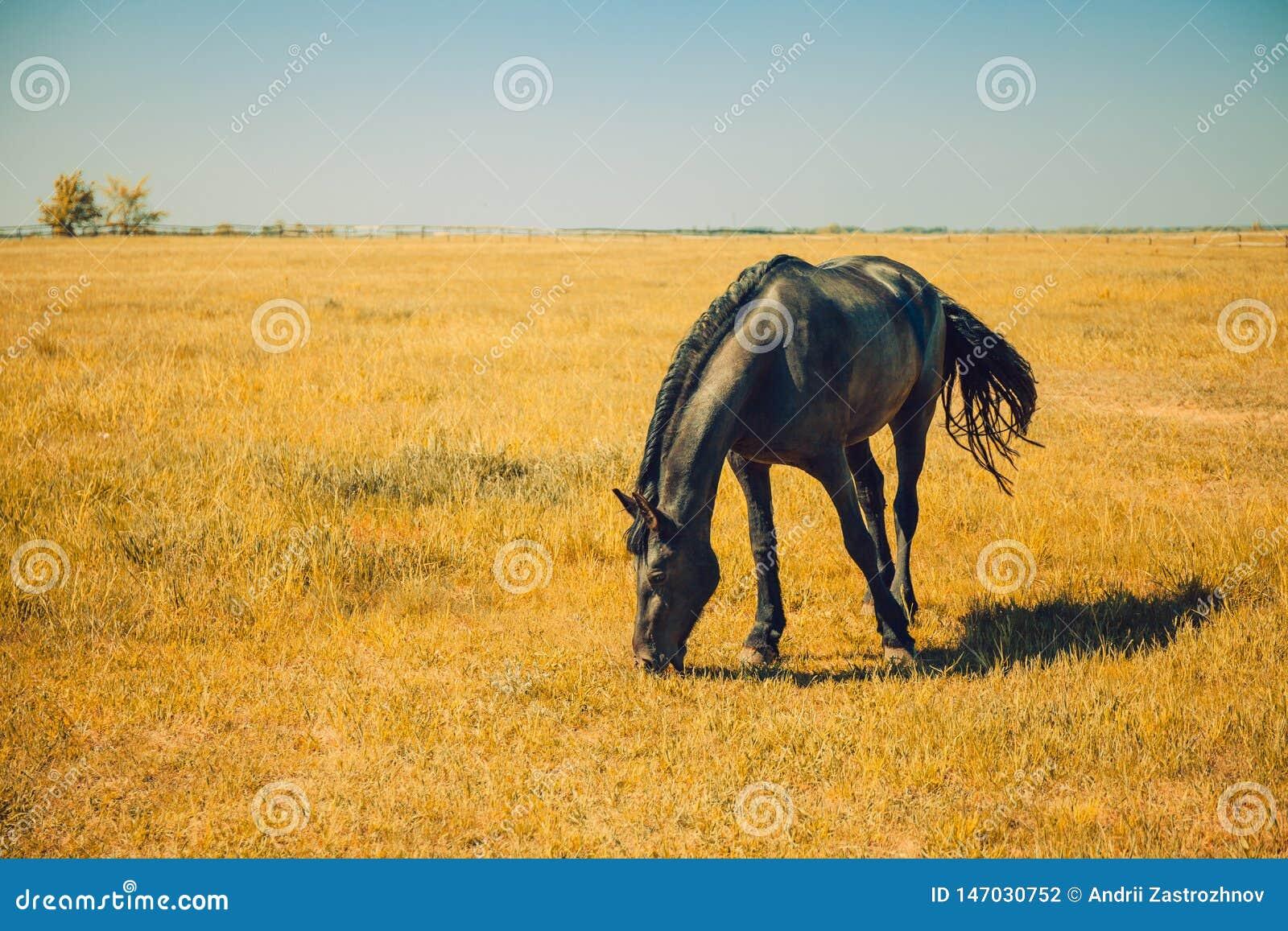 Het landbouwbedrijf van het rassenpaard, ruiterkudde