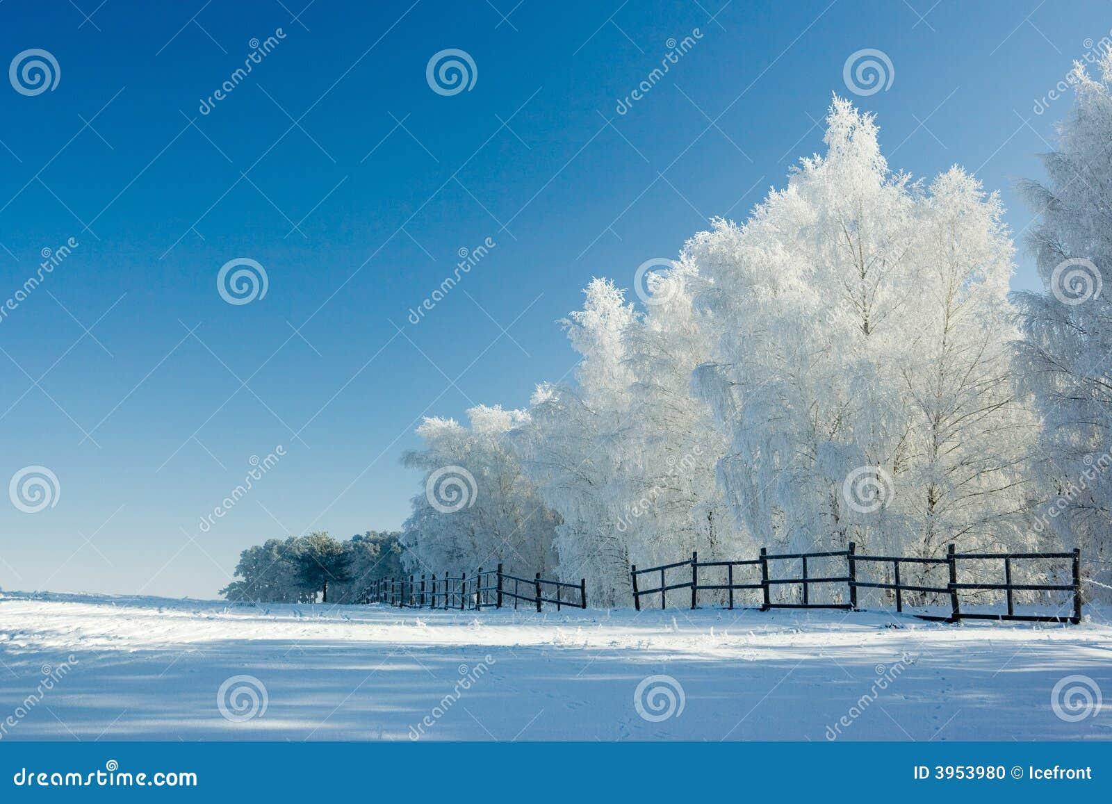 Het landschap en de bomen van de winter
