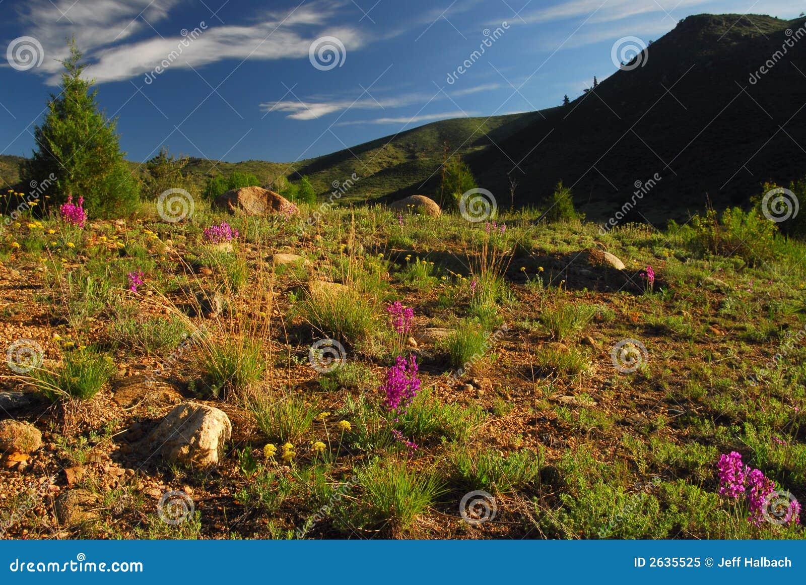 Het Landschap van Colorado