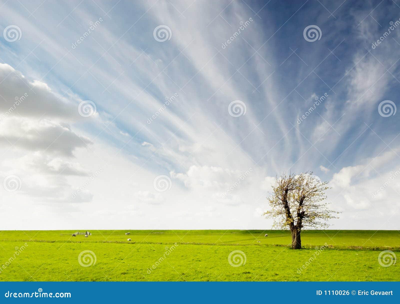 Het landschap van de boom