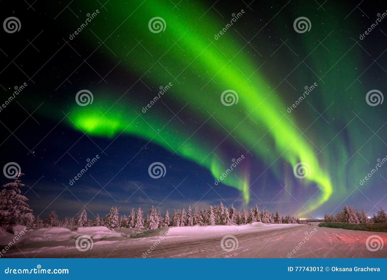 Het landschap van de de winternacht met bos, weg en polair licht over de bomen