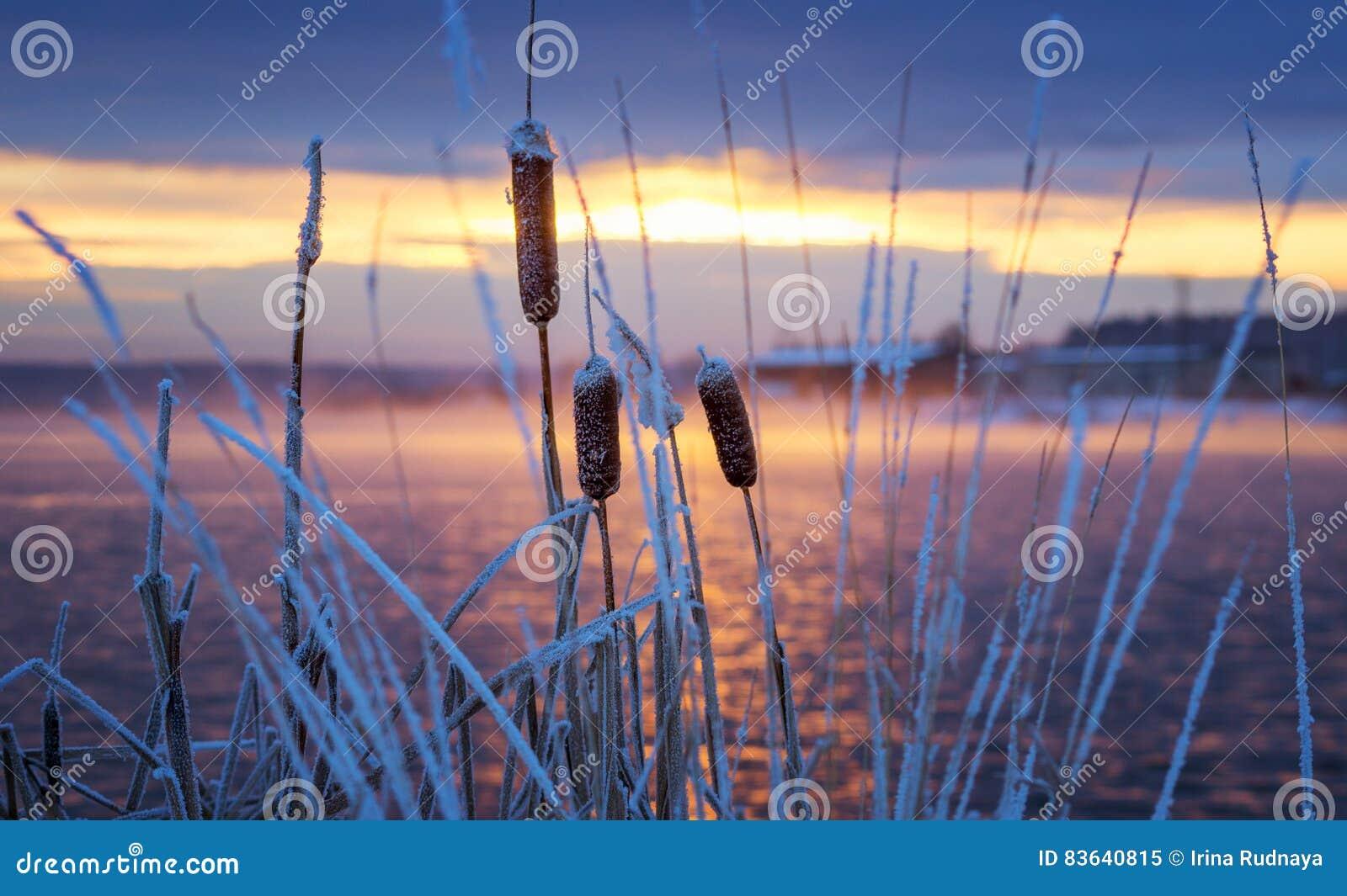 Het landschap van de de winterochtend op de rivier met de mist en
