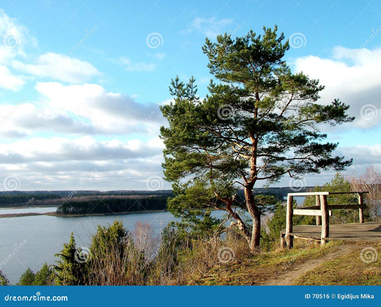 Het landschap van de pijnboom