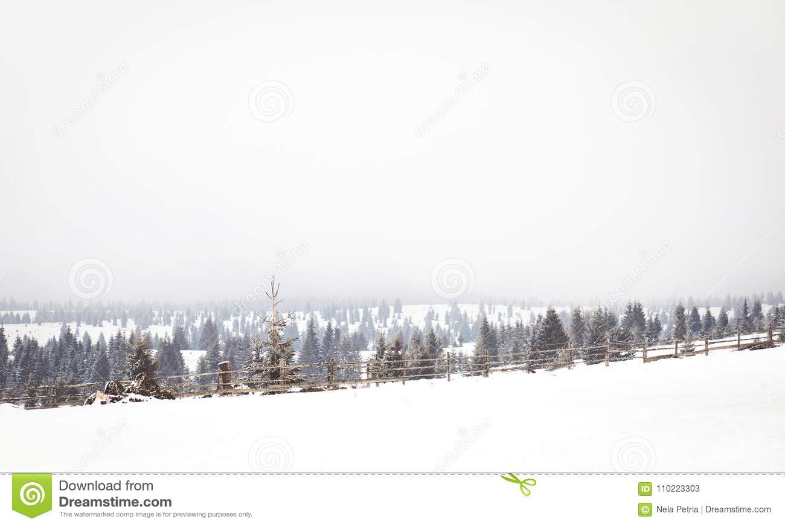 Het landschap van het de wintersprookjesland, sneeuwsparrenachtergrond
