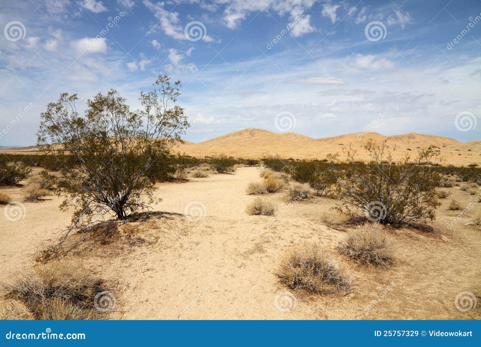 Het landschap van de woestijn (woestijn Mojave)
