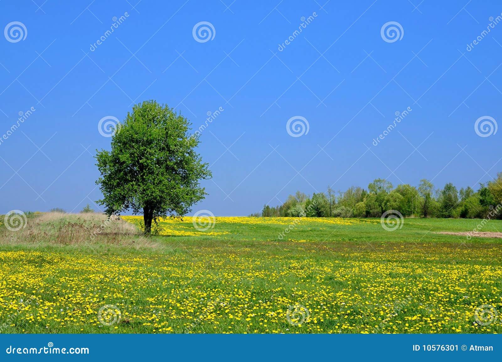 Het Landschap van de zomer