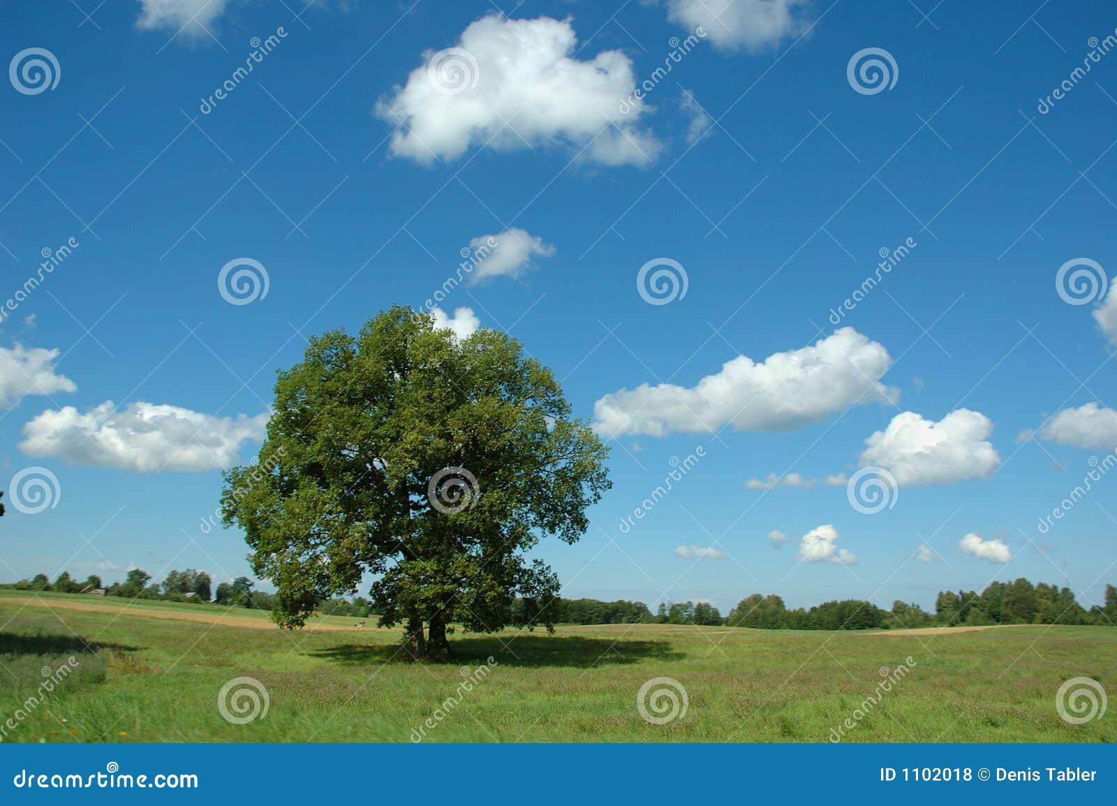 Het landschap van de zomer met boom