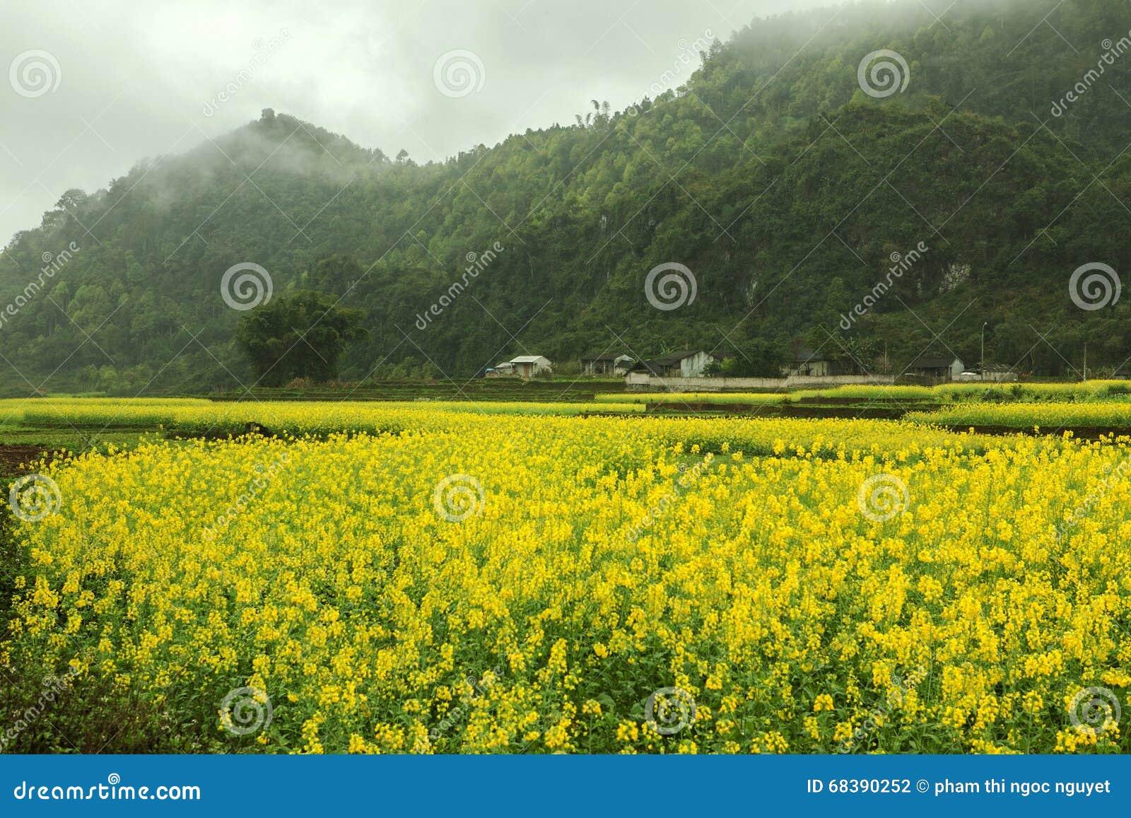 Het landschap van het Canolagebied
