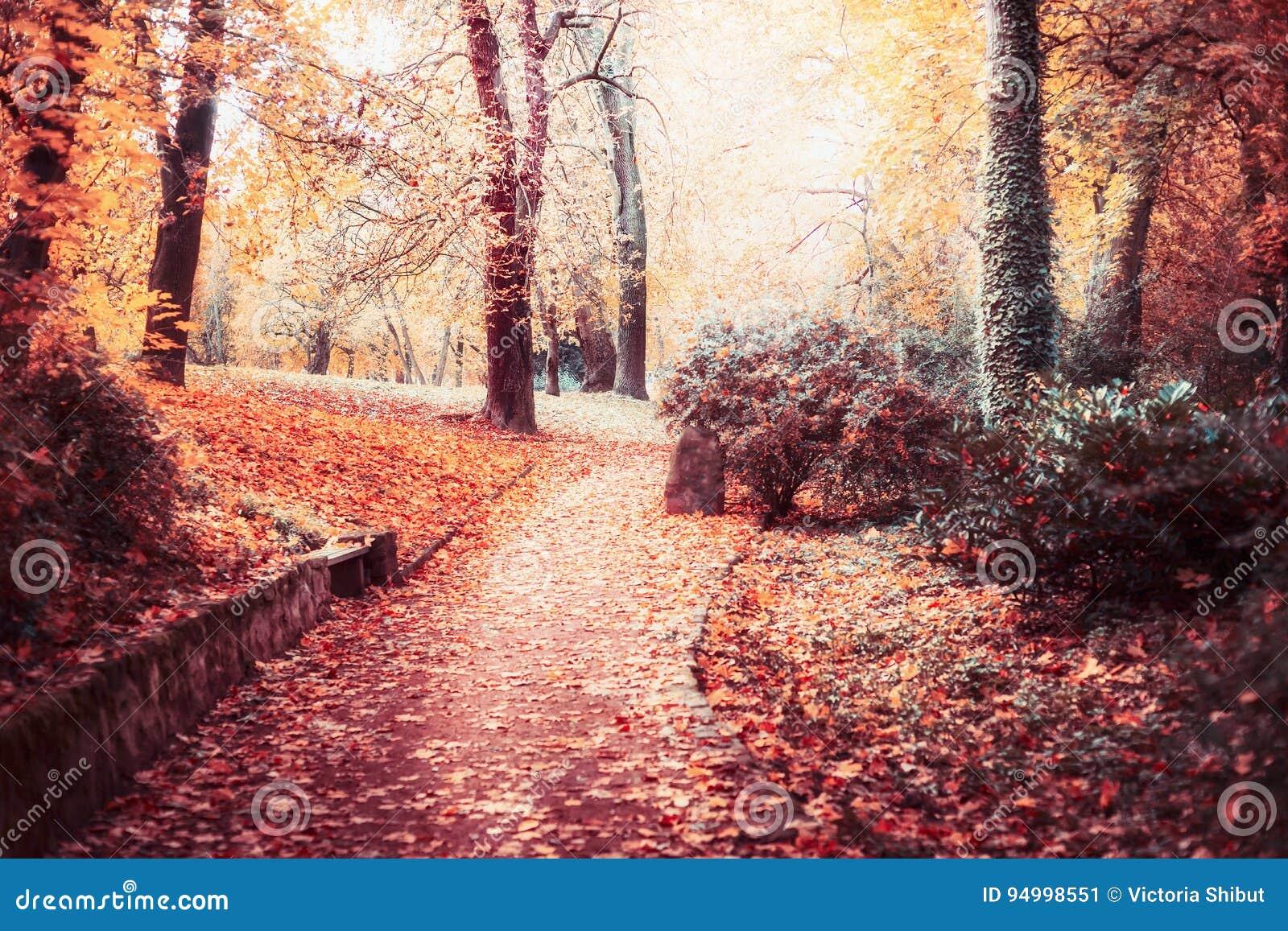 Het landschap van het de herfstpark met weg, de bomen, het Mooie gebladerte en de zon glanzen, openluchtdalingsaard