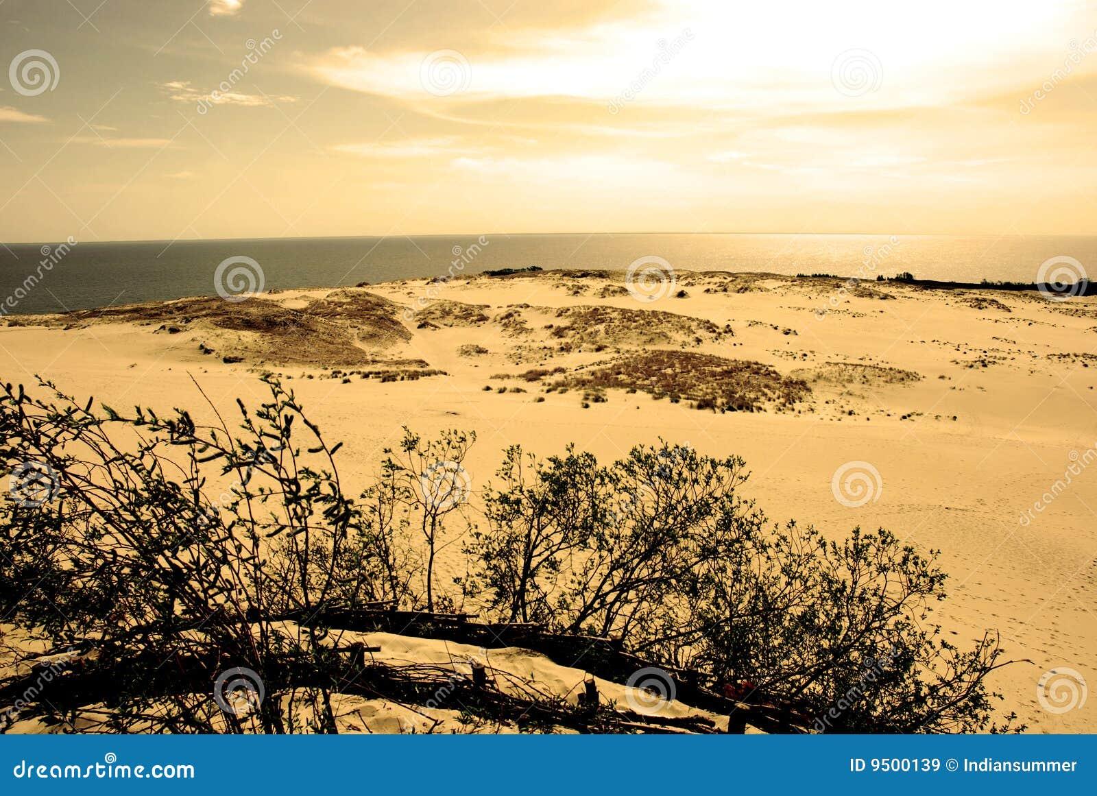 Het landschap van het duin