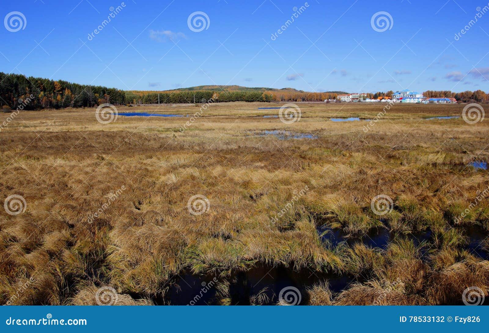 Het landschap van het moerasland